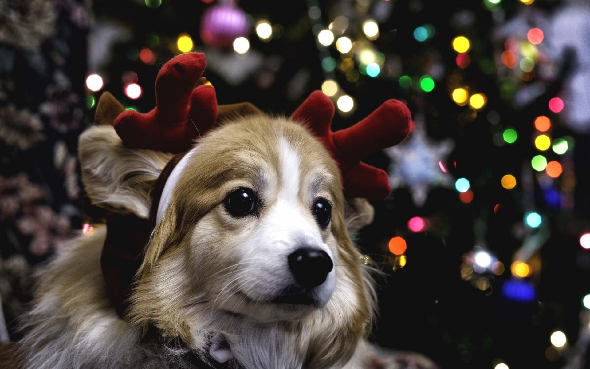 1920x1200 christmas puppy wallpaper wallpapersafari .