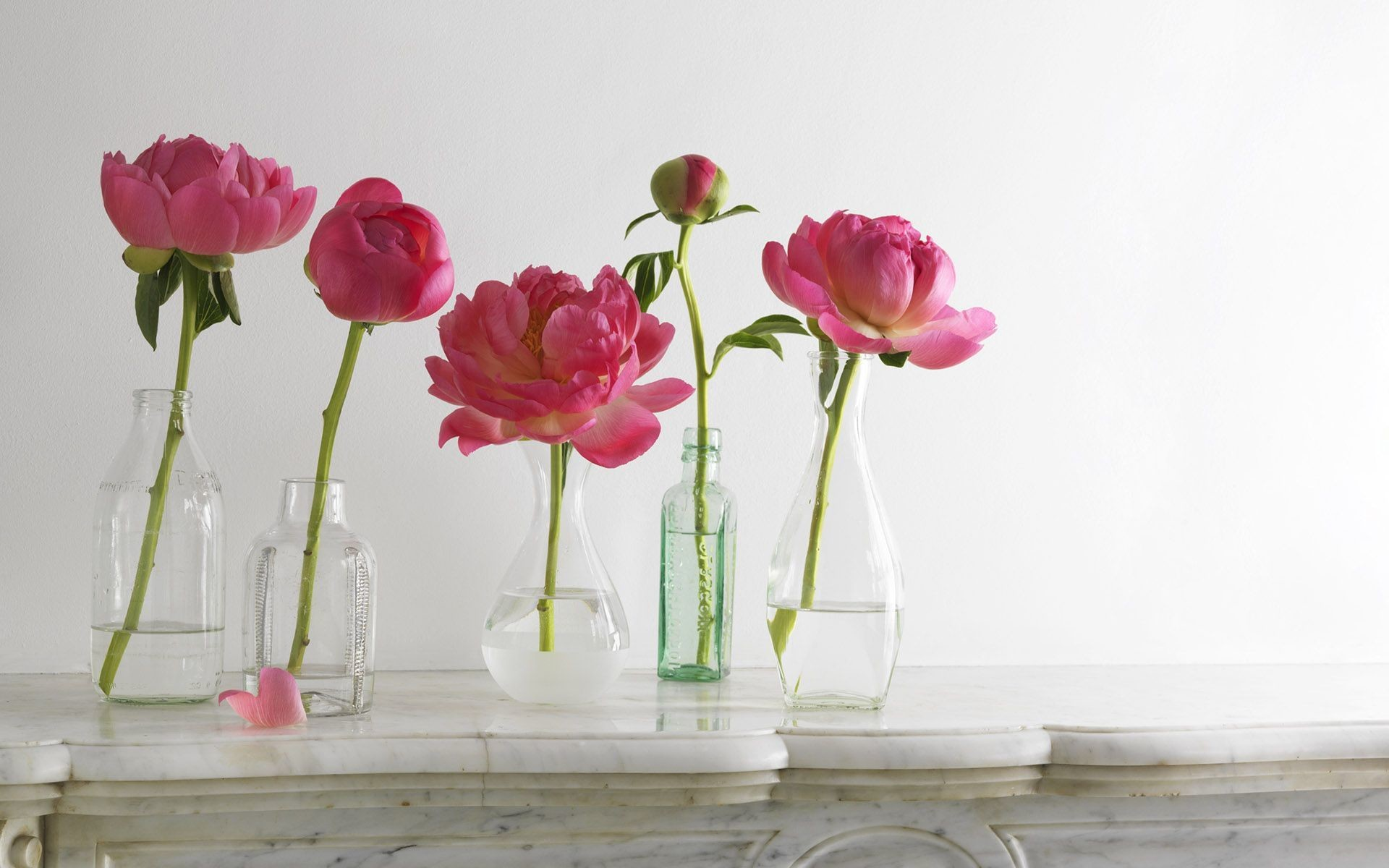 1920x1200 ... Peonies in the vase
