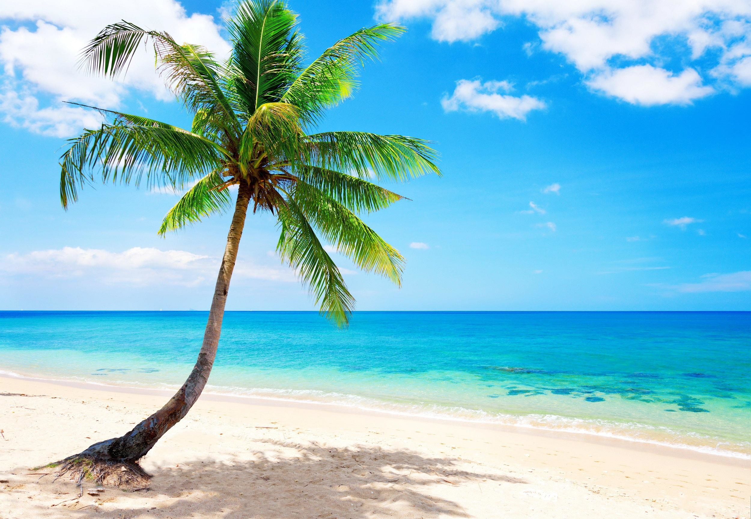 Palm Tree Beach Wallpaper (53+ images)
