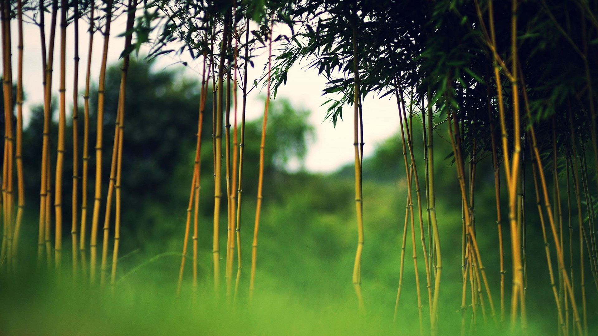 1920x1080 Images Bamboo Backgrounds.