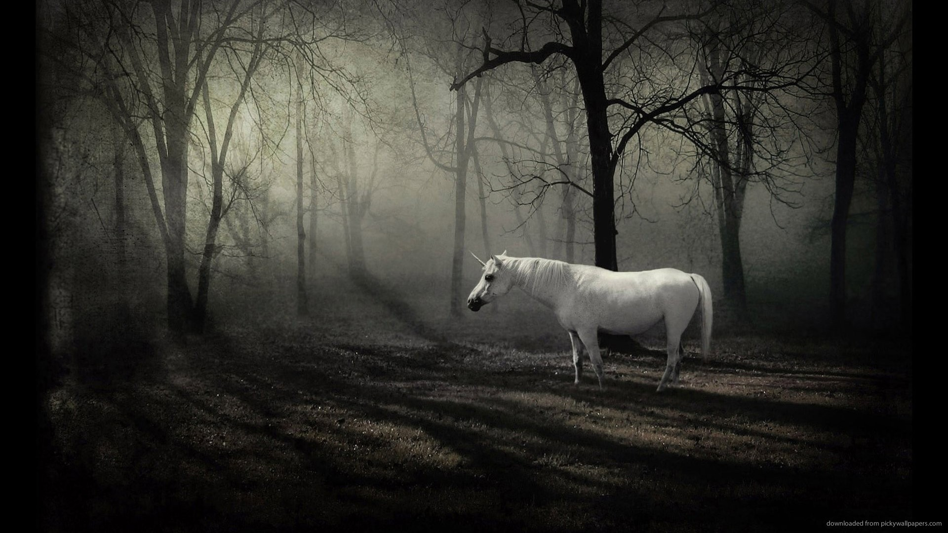 1920x1080 HD Unicorn in dark forest wallpaper