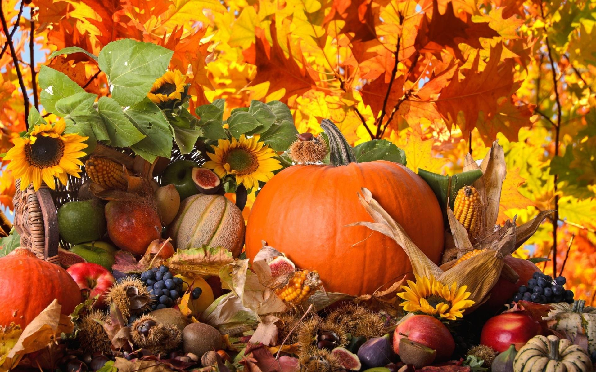 Thanksgiving Wallpaper for Desktop (69+