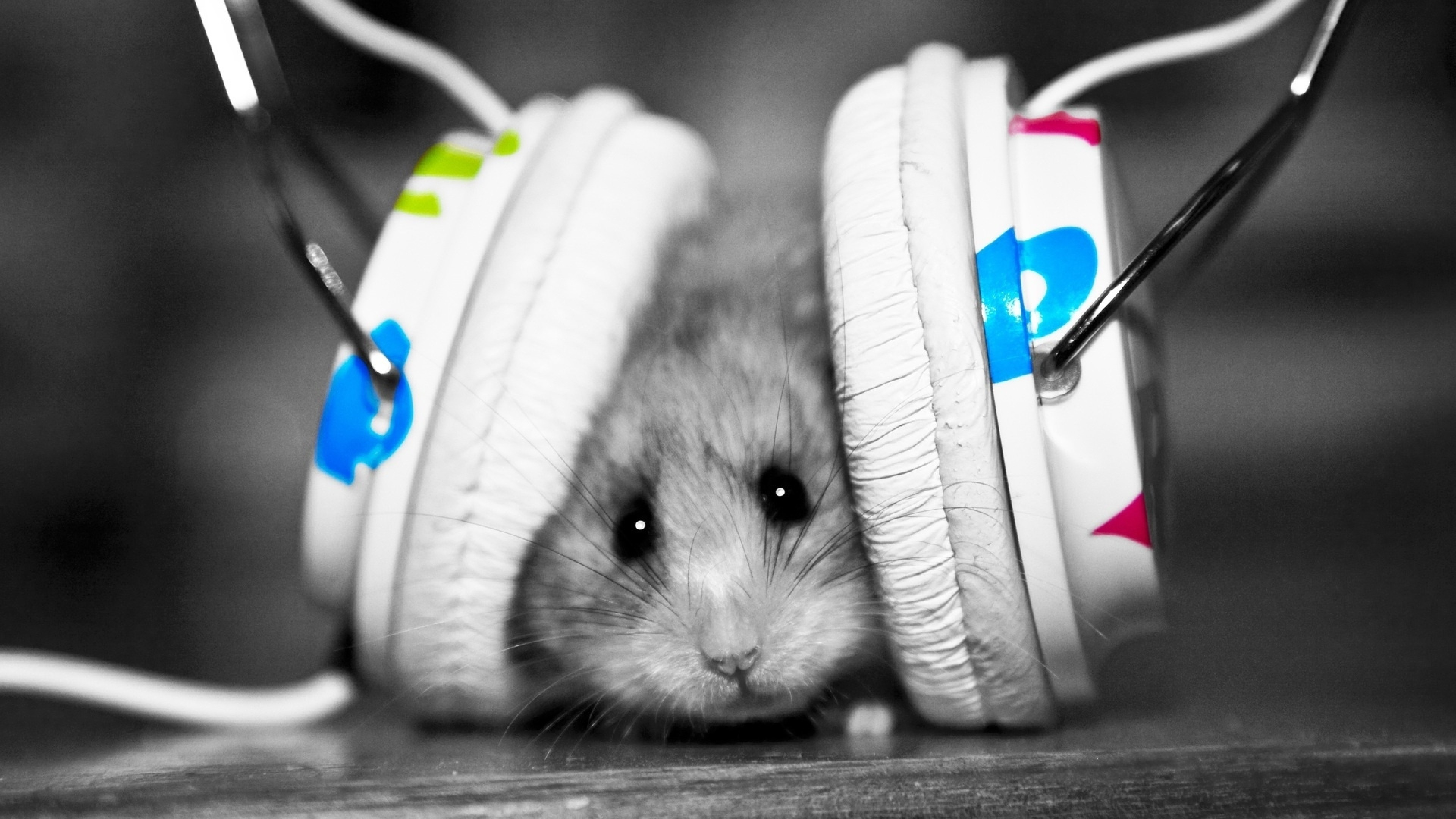 3840x2160 Preview wallpaper funny, music fan, music, little, hamster
