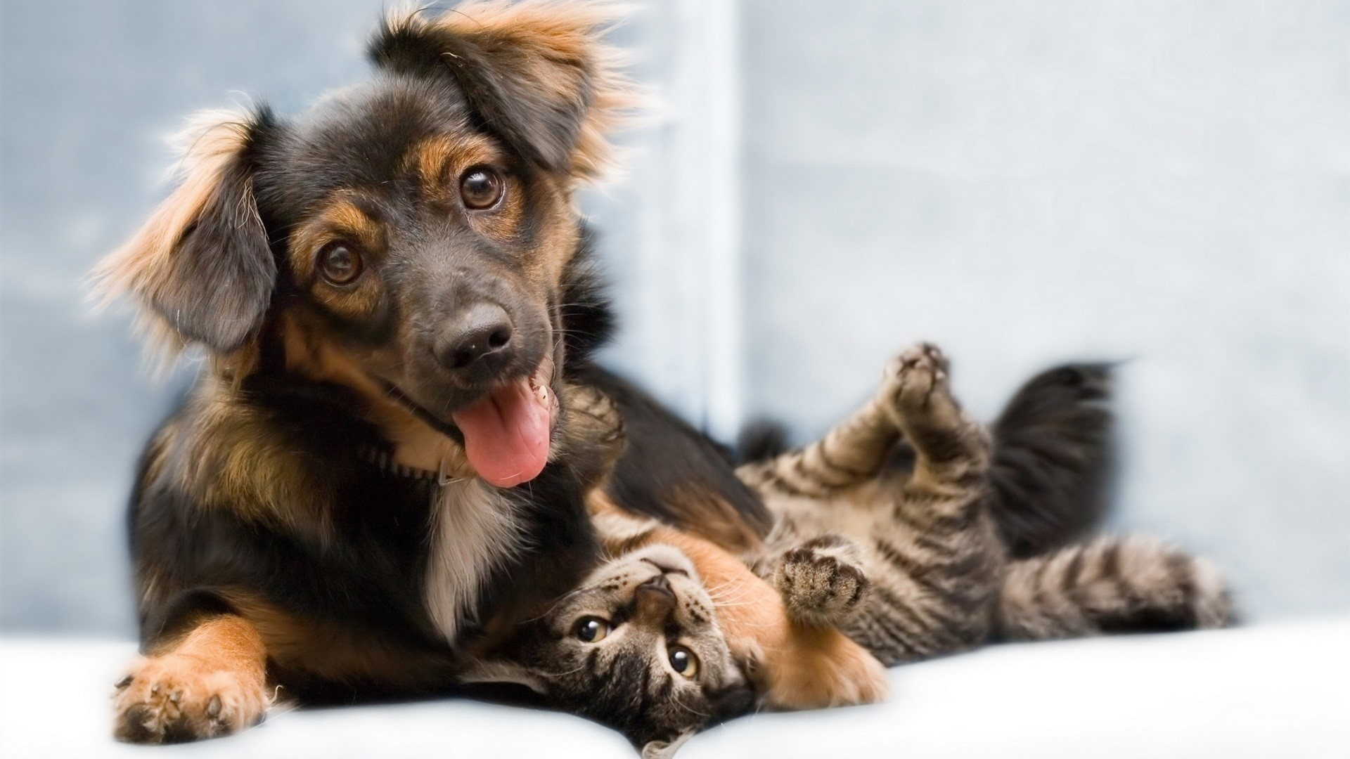 1920x1080 Wallpaper-Cat-dog-friends-full-hd-