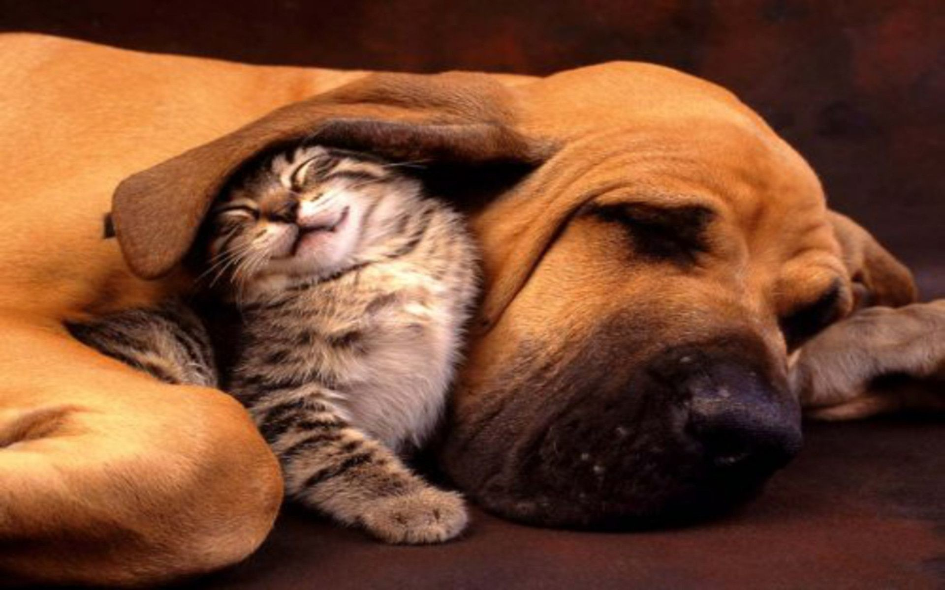 1920x1200 dog-and-cat-wallpaper-23 | Collection Of Picture