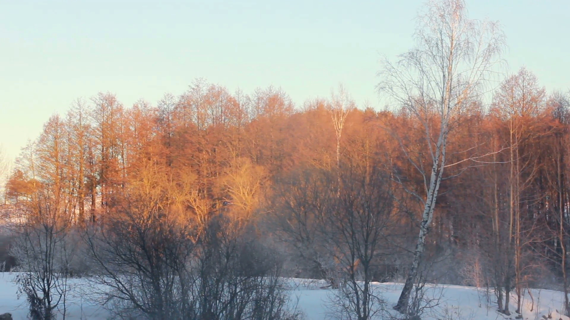 1920x1080 Winter wonderland. Birch tree on winter forest background. Panorama of  winter forest landscape. Orange sunlight on winter trees. Bright sun rays  cover snowy ...