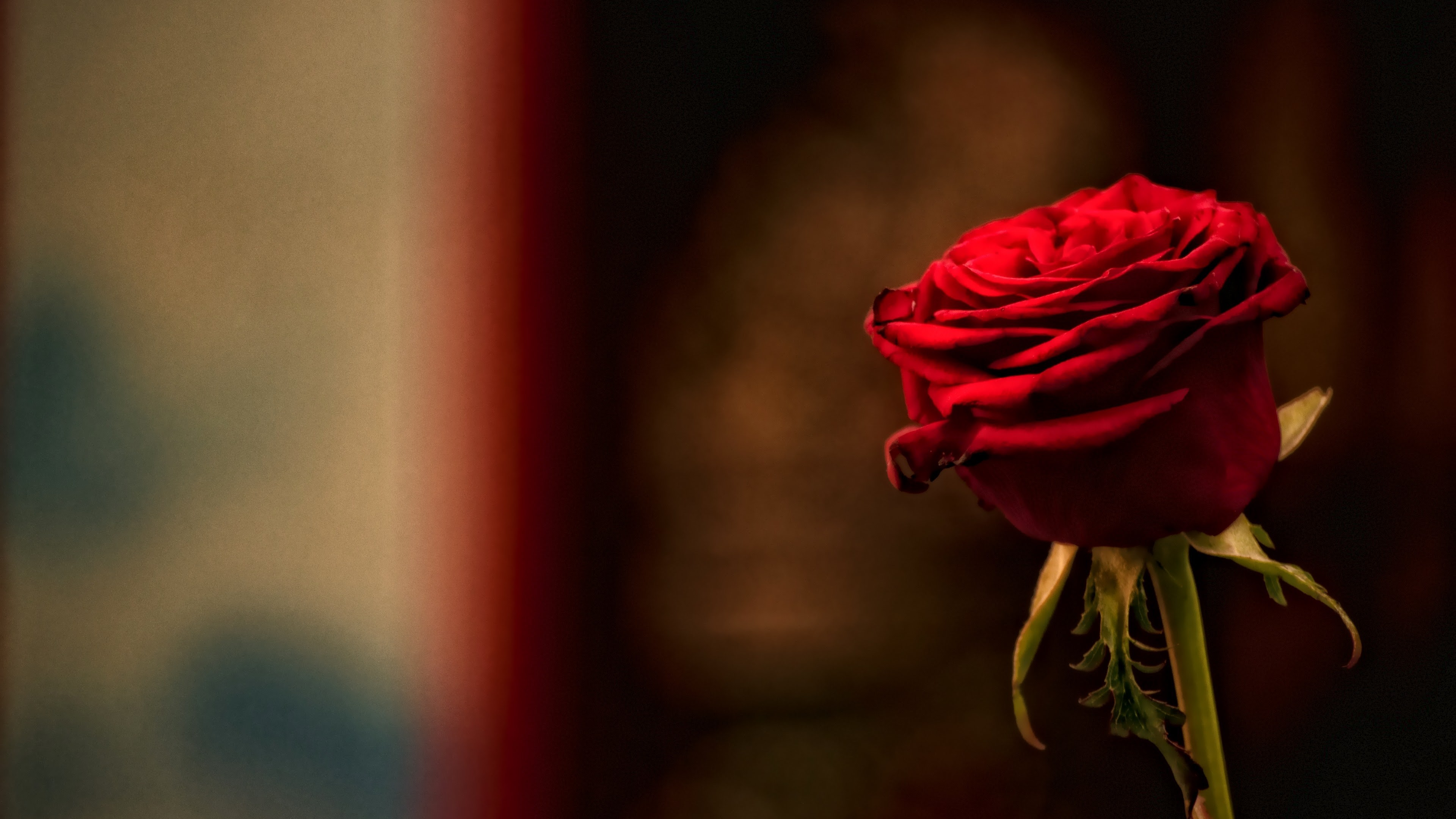 Romanticos Fondos De Pantalla: Red Roses Wallpapers For Desktop (50+ Images