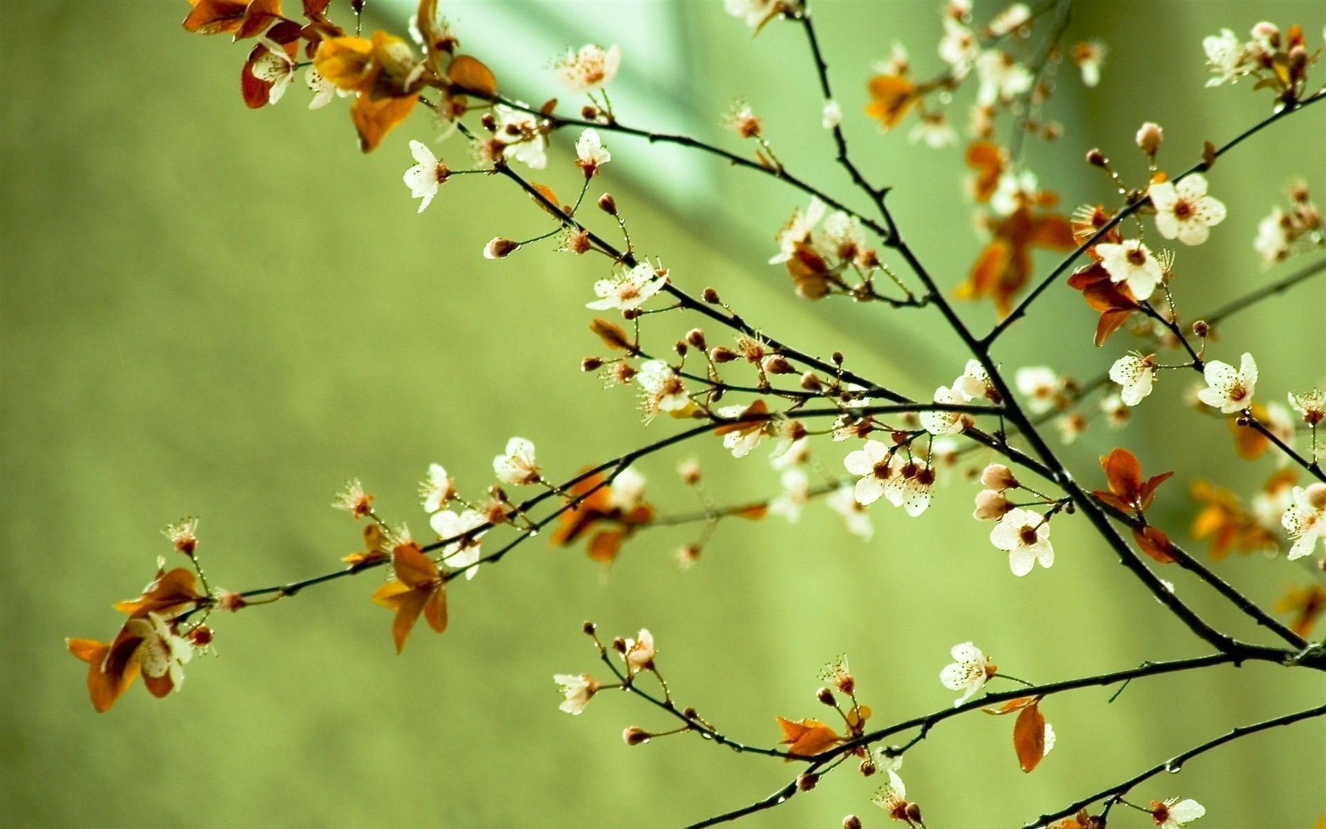1920x1200 Spring Flowers Spring HD wallpapers - Spring Flowers Spring
