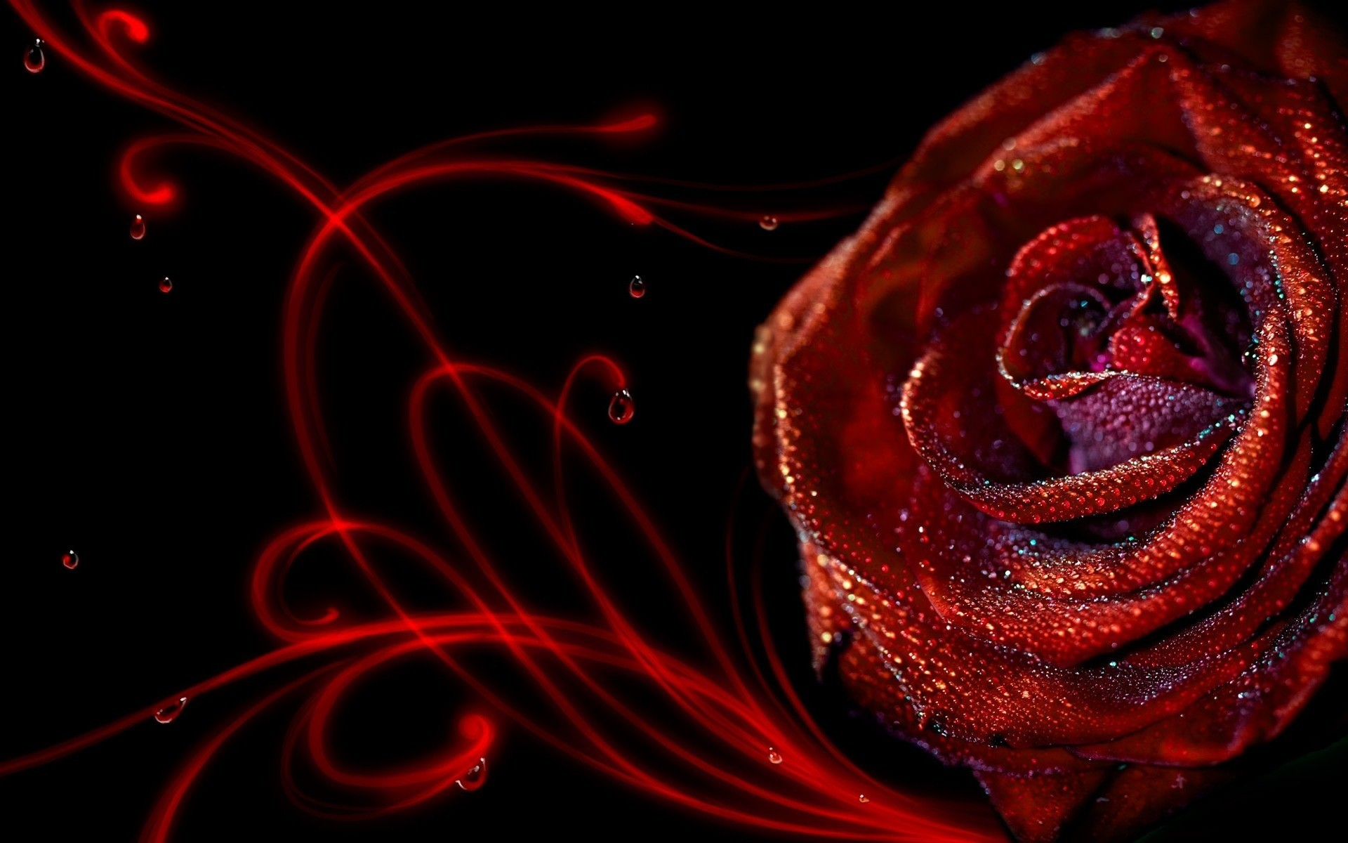 Black Silk Wallpaper Red Rose Black Silk Wallpaper Red Rose