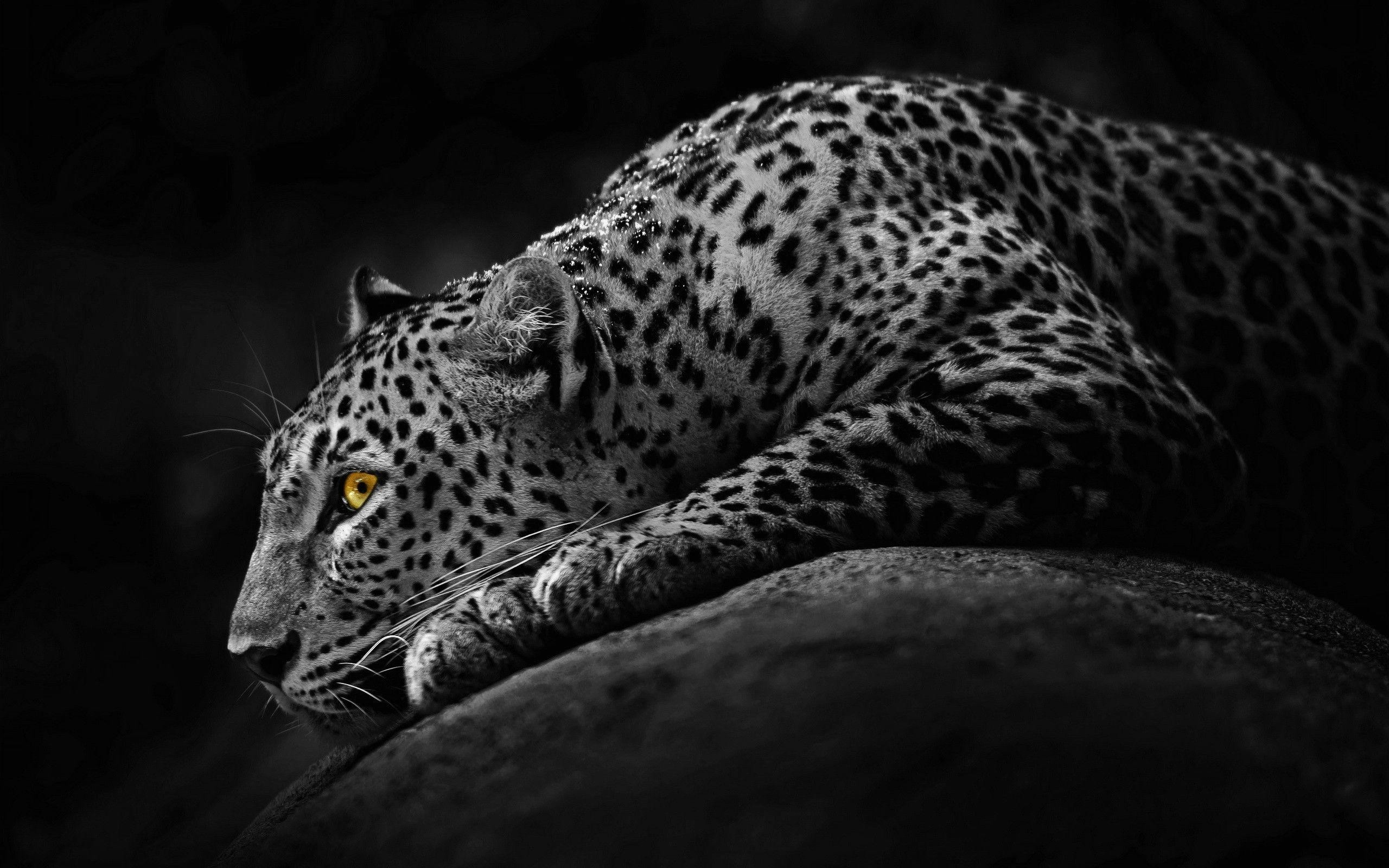 2560x1600 Jaguar Animal Wallpapers - Full HD wallpaper search