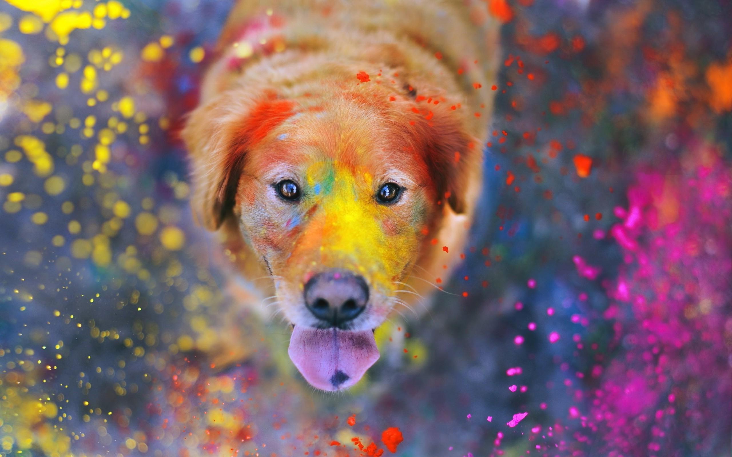 Animals Dog Filter Wallpapers Hd Desktop And Mobile: Paint Splatter Wallpaper (73+ Images