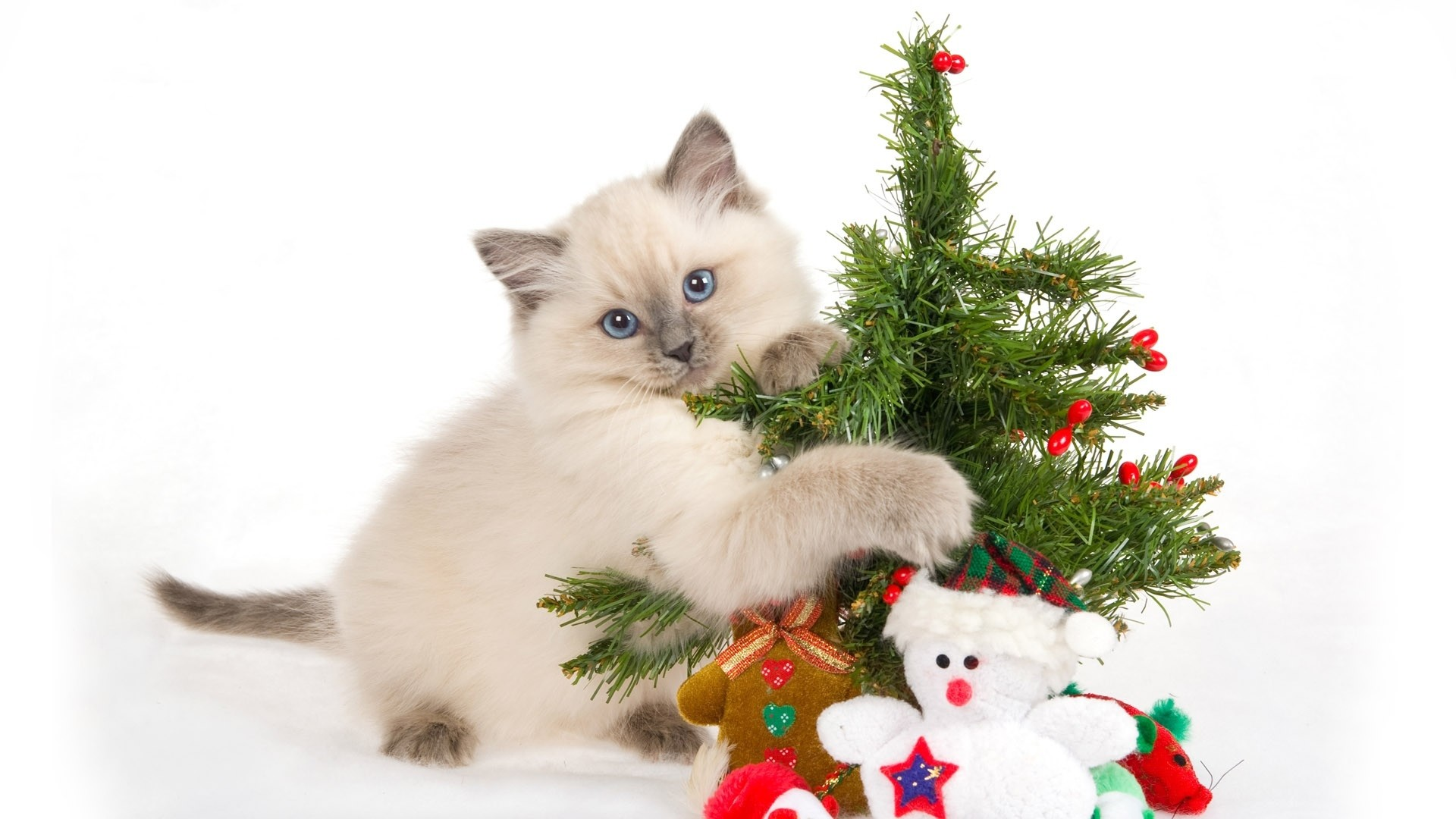 1920x1080  Wallpaper kitten, spotted, toys, tree, new year, christmas