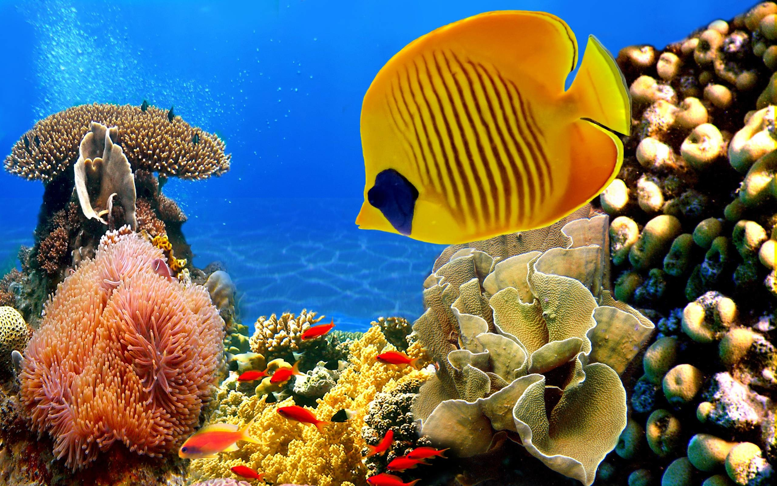 2560x1600 Tropical Fish Wallpapers for Desktop | Free Desk Wallpapers