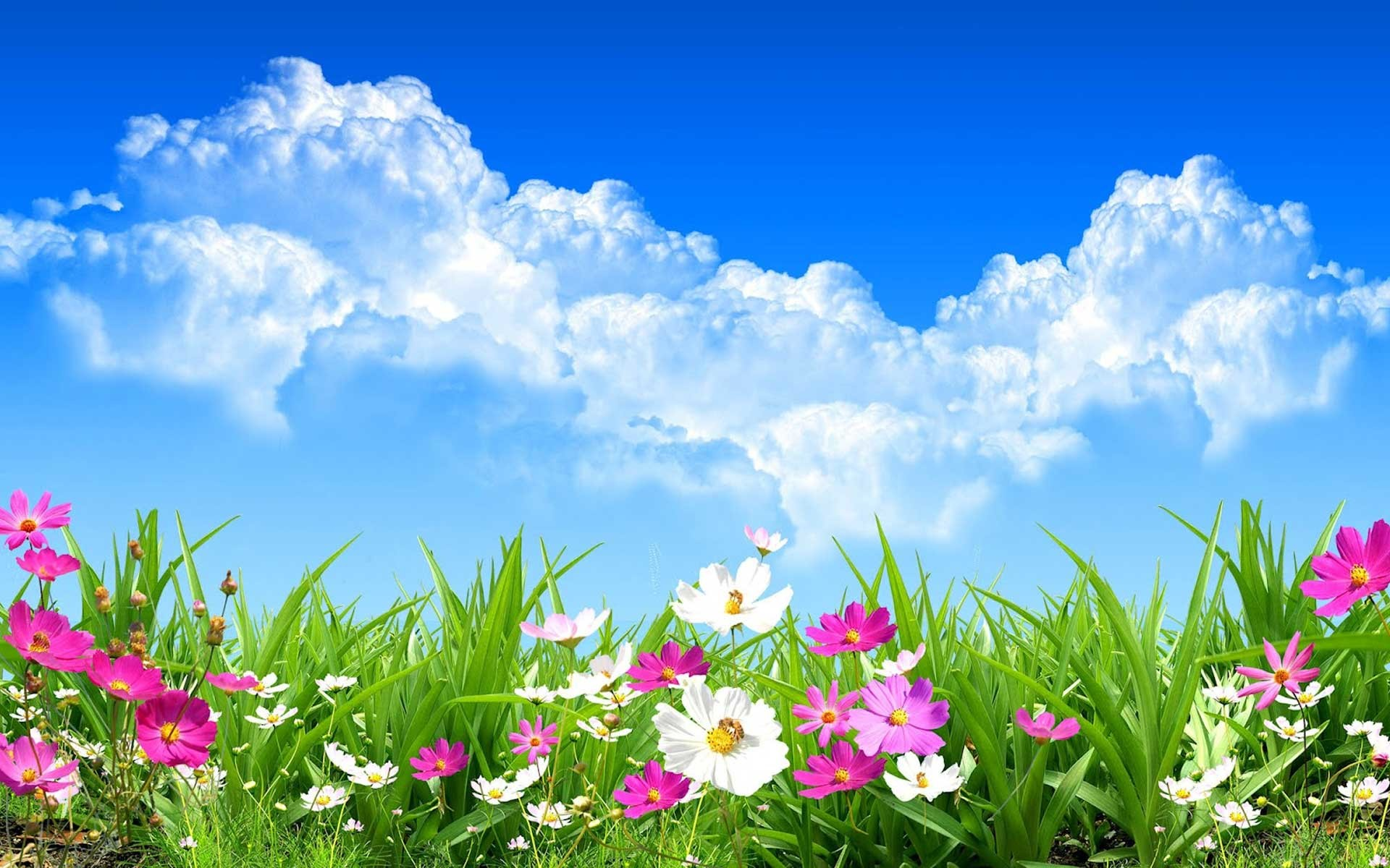 35 Beautiful Spring Pictures And Wallpapers: Spring Background (52+ Images