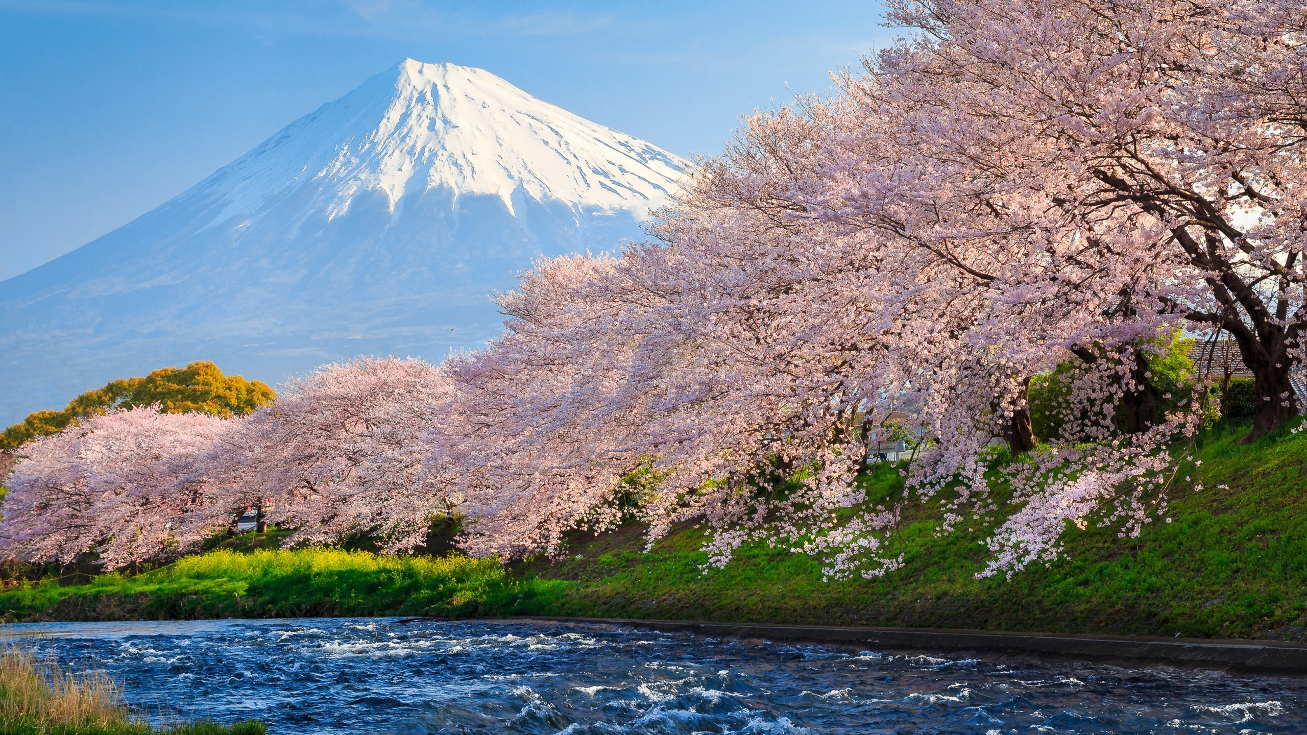 2560x1440 sakura-river-japan-do.jpg