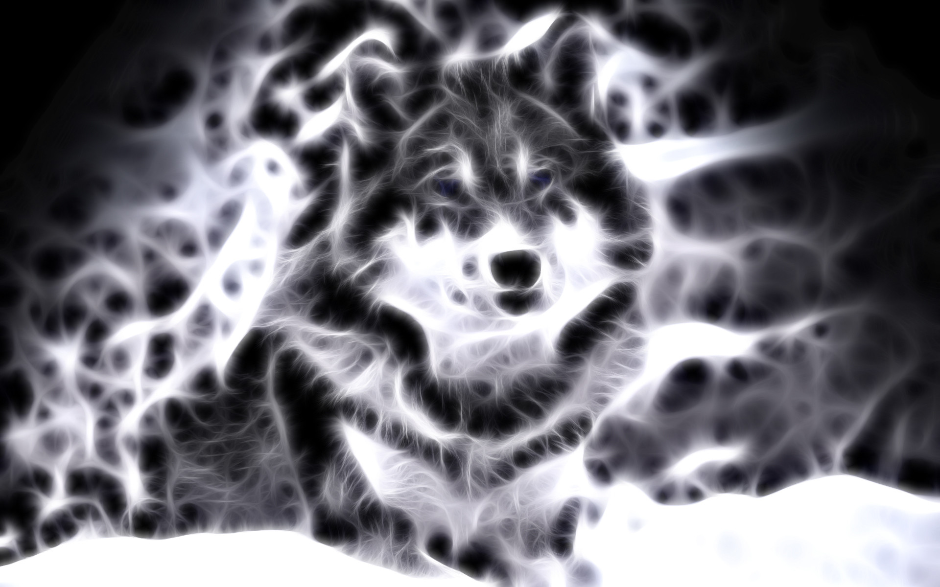 1920x1200 lightanimals | Cool Animal Wallpaper Light Wolf Wallpapers For gt Cool  Animal