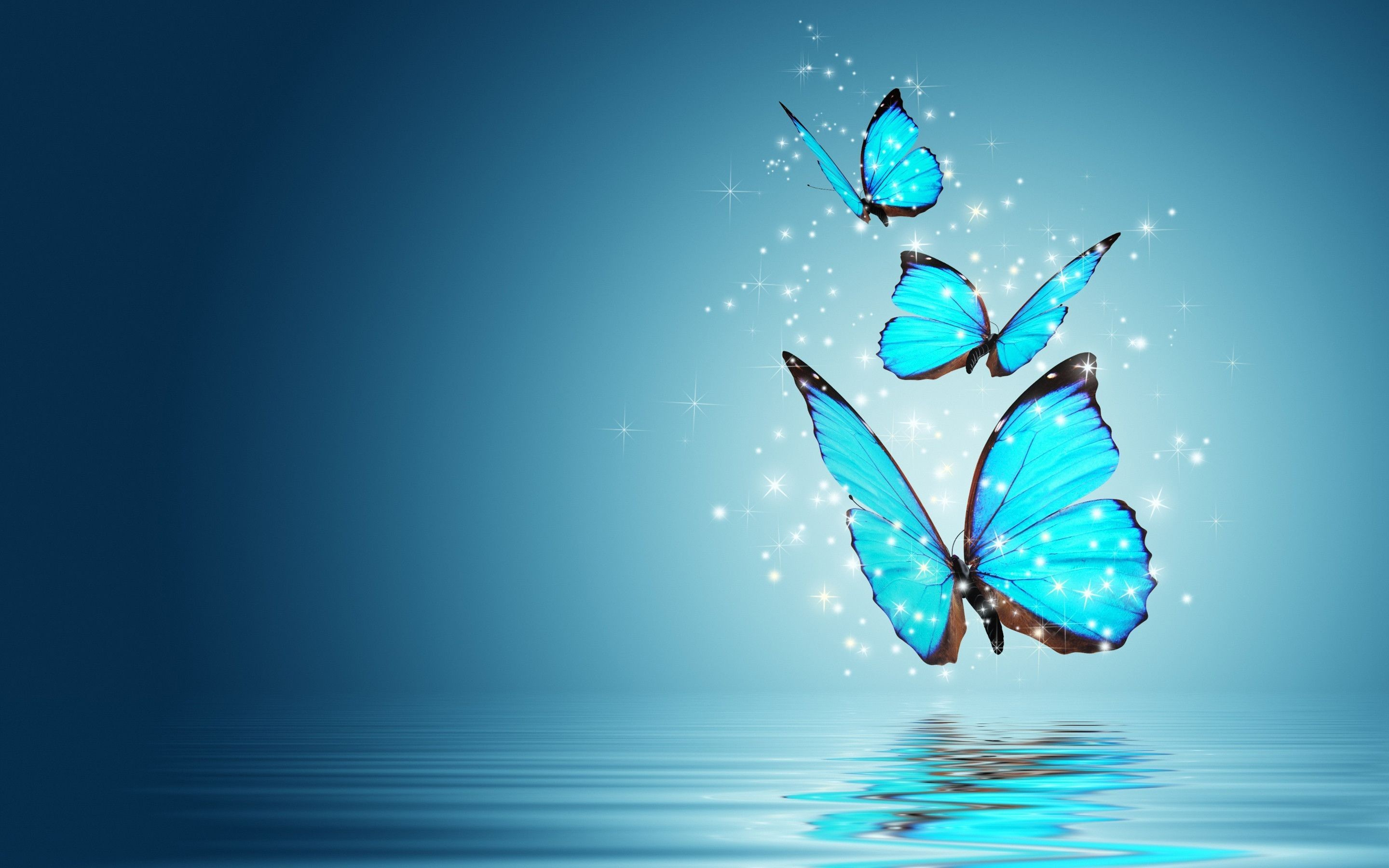 Blue Butterfly Background 52 Images