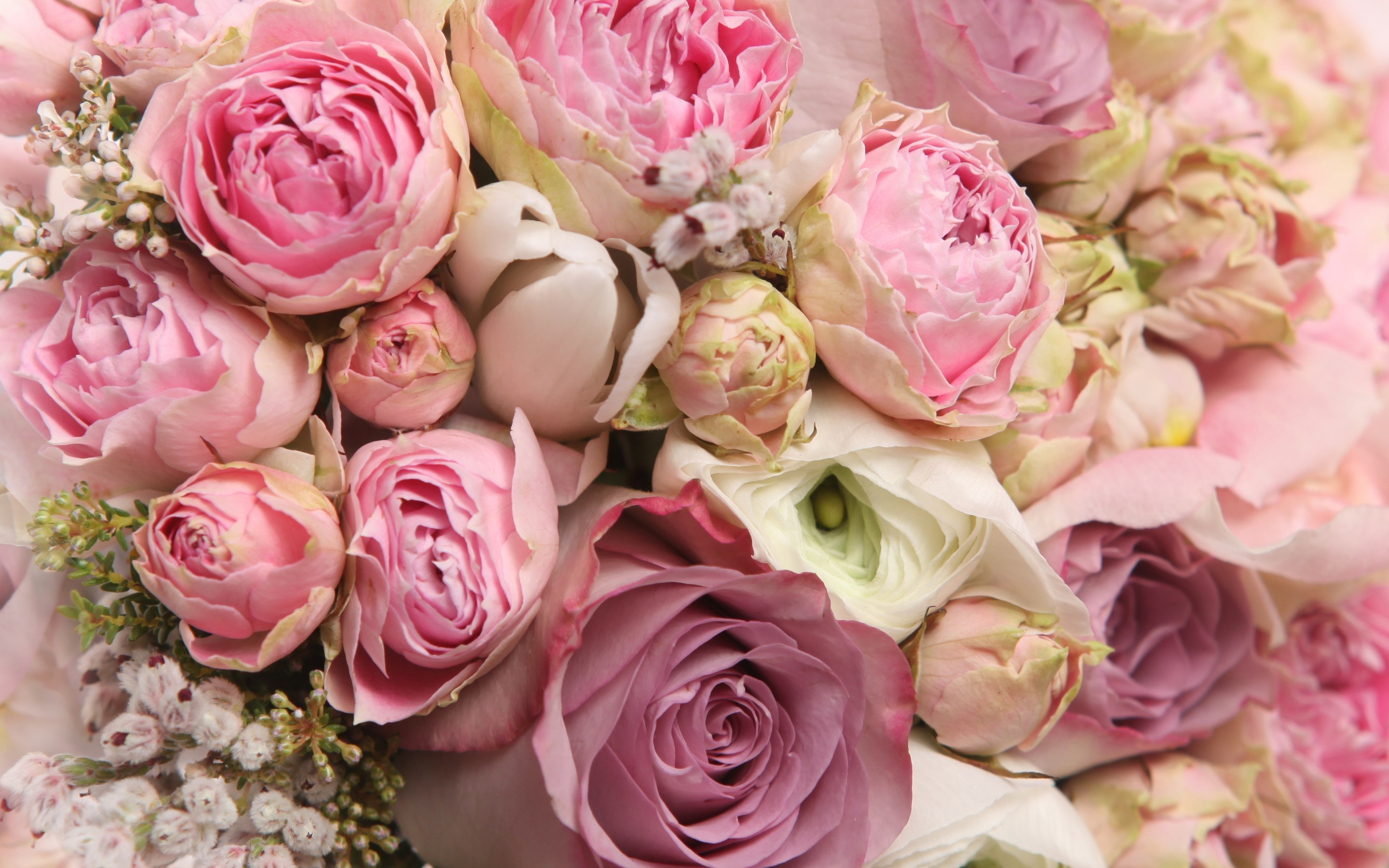 Rose Flowers Background (51+ images)