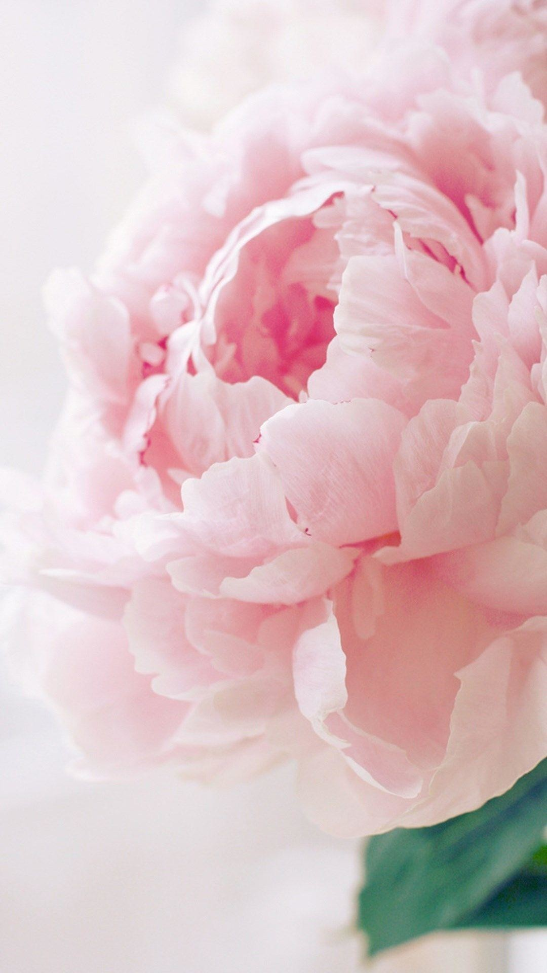 1080x1920 Pink Peonies iPhone wallpaper | Backgrounds & Quotes | Pinterest .