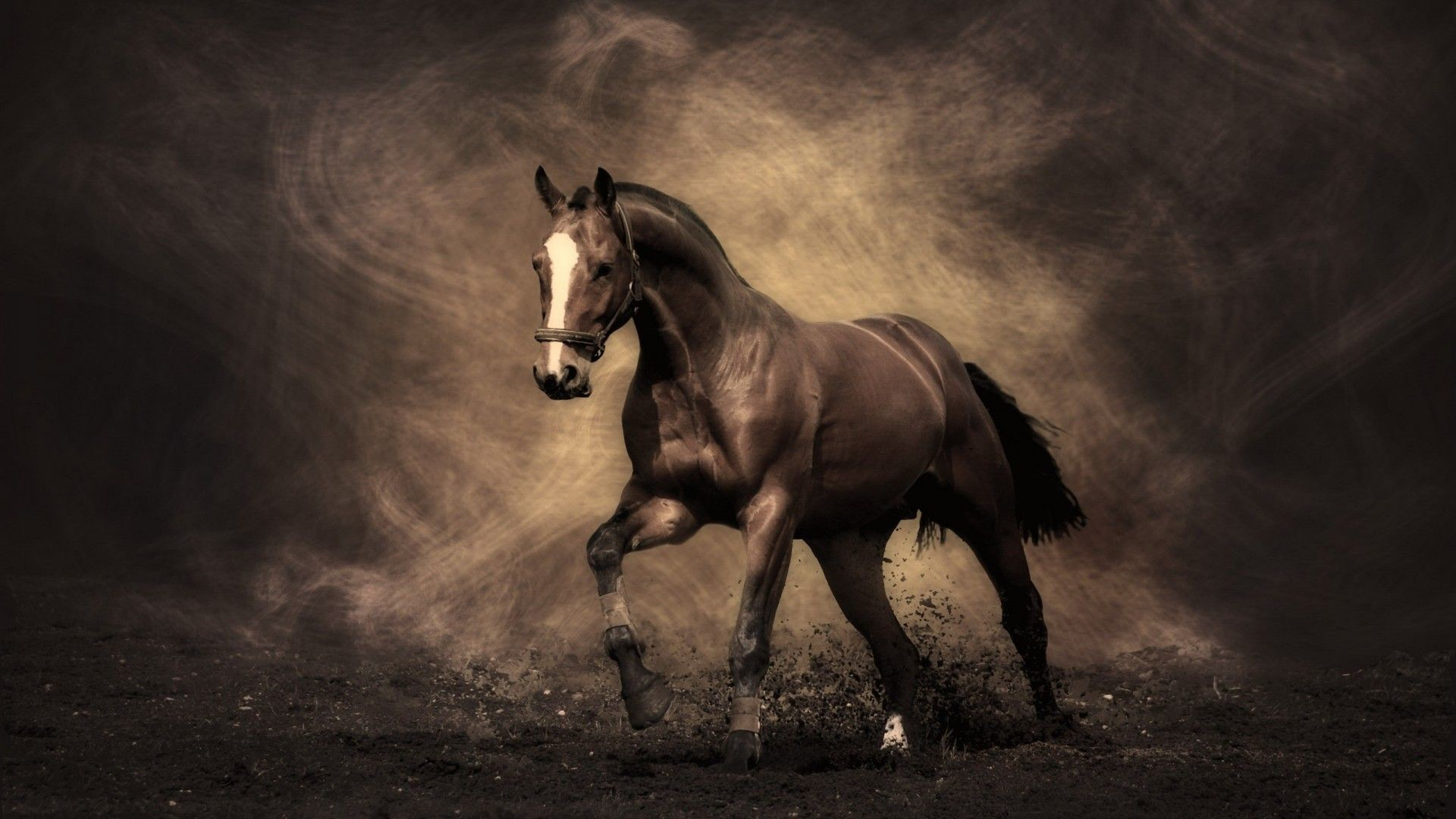 1920x1080 gif horse images | Horse Desktop in high resolution for free. Get Arabian  Racing Horse