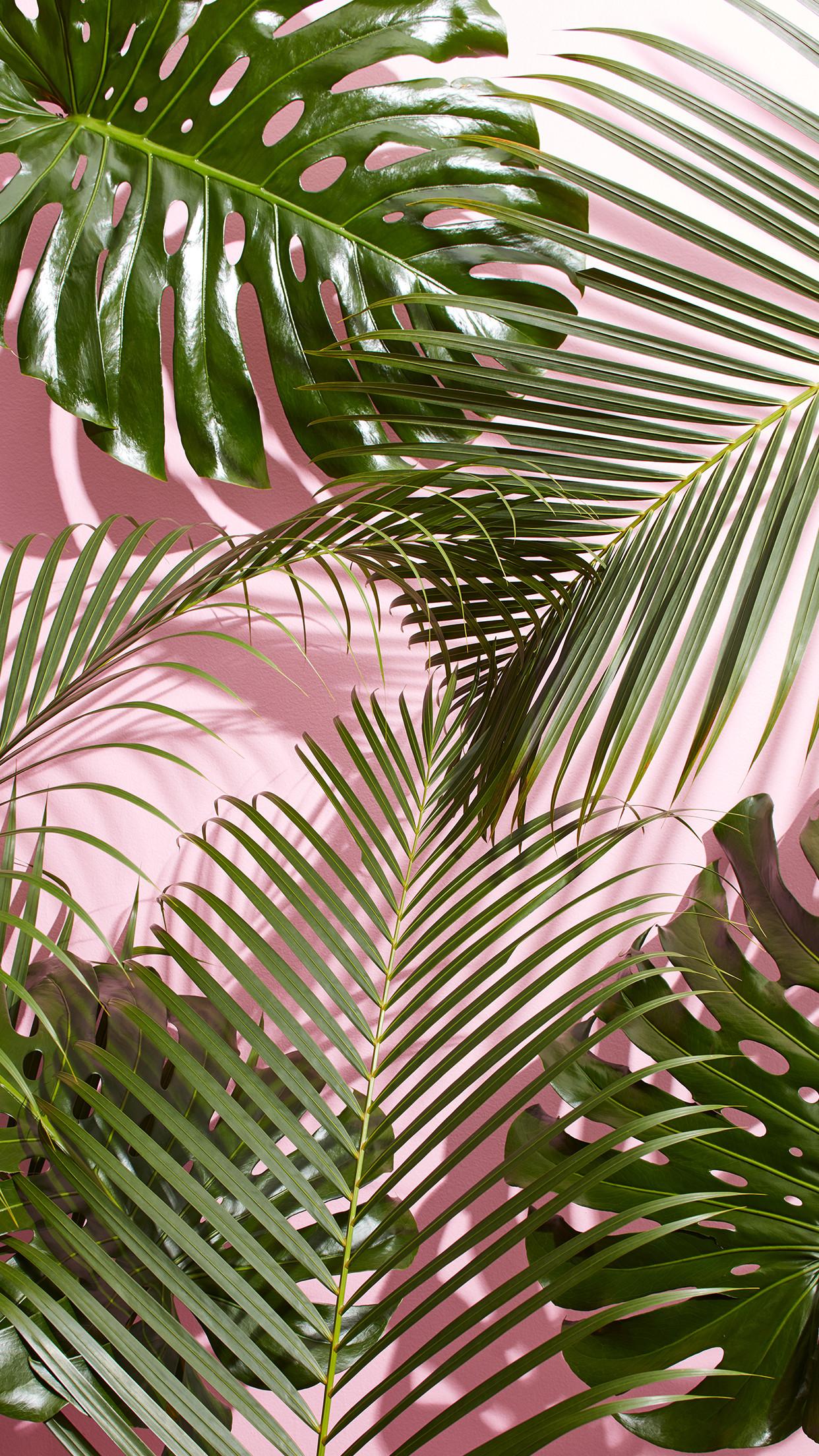 tropical palm leaf wallpaper 24 images