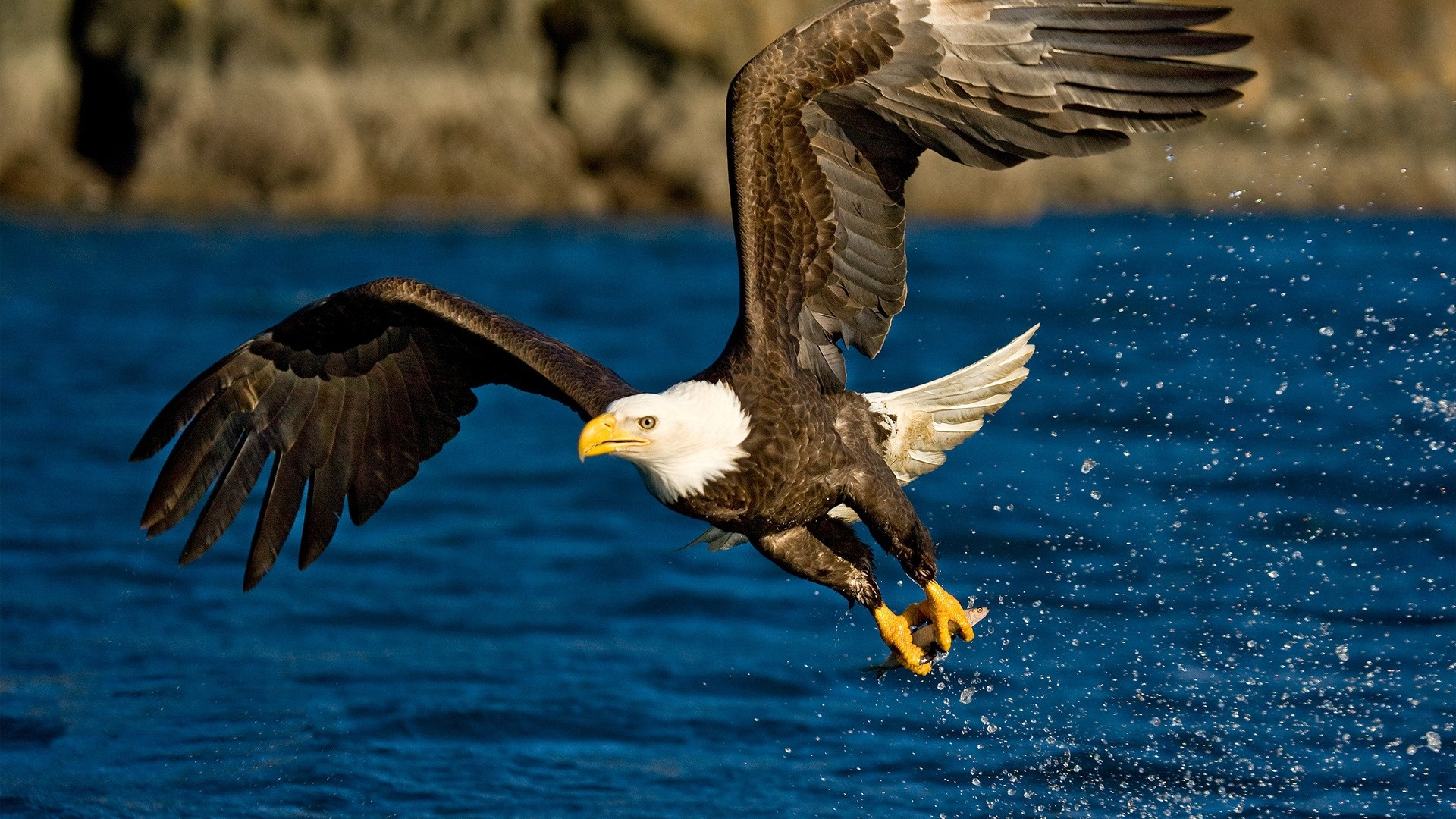 1920x1080 eagle with fish