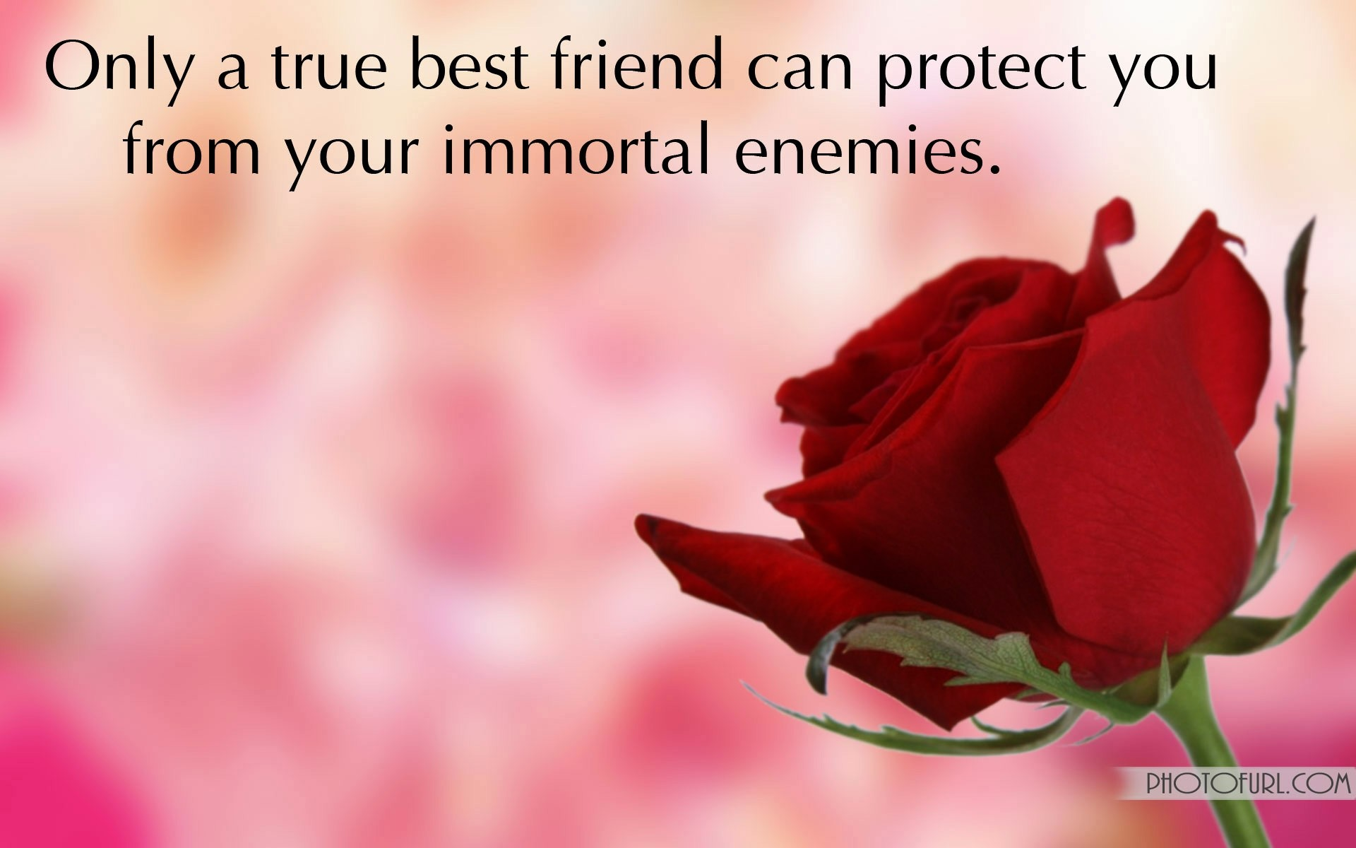 Beautiful Wallpapers Of Friendship Love 57436 DFILES