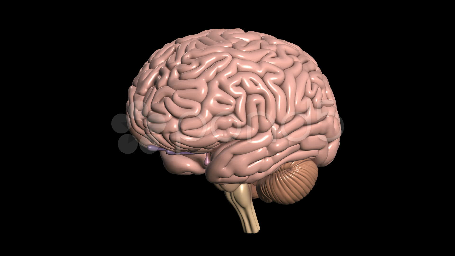 Brain wallpaper hd 67 images - Brain wallpaper 3d ...