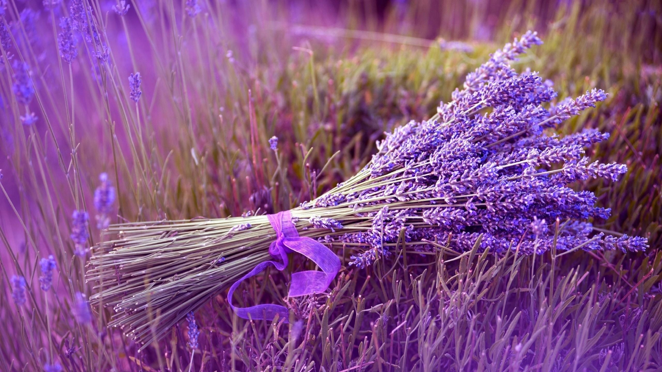 2560x1440  Wallpaper lavender, flower, ribbon, field