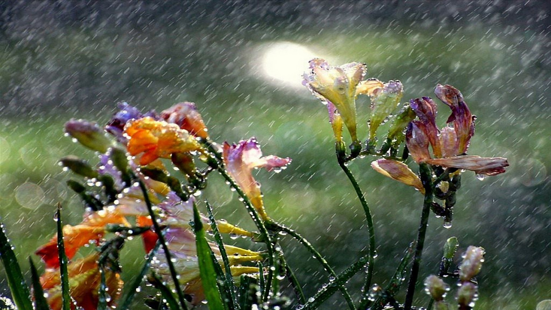 1920x1080 Beautiful-Rain-HD-Wallpapers