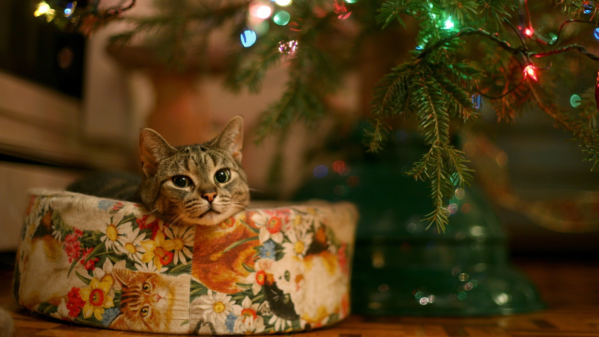 1920x1080 Christmas Kitty Wallpaper