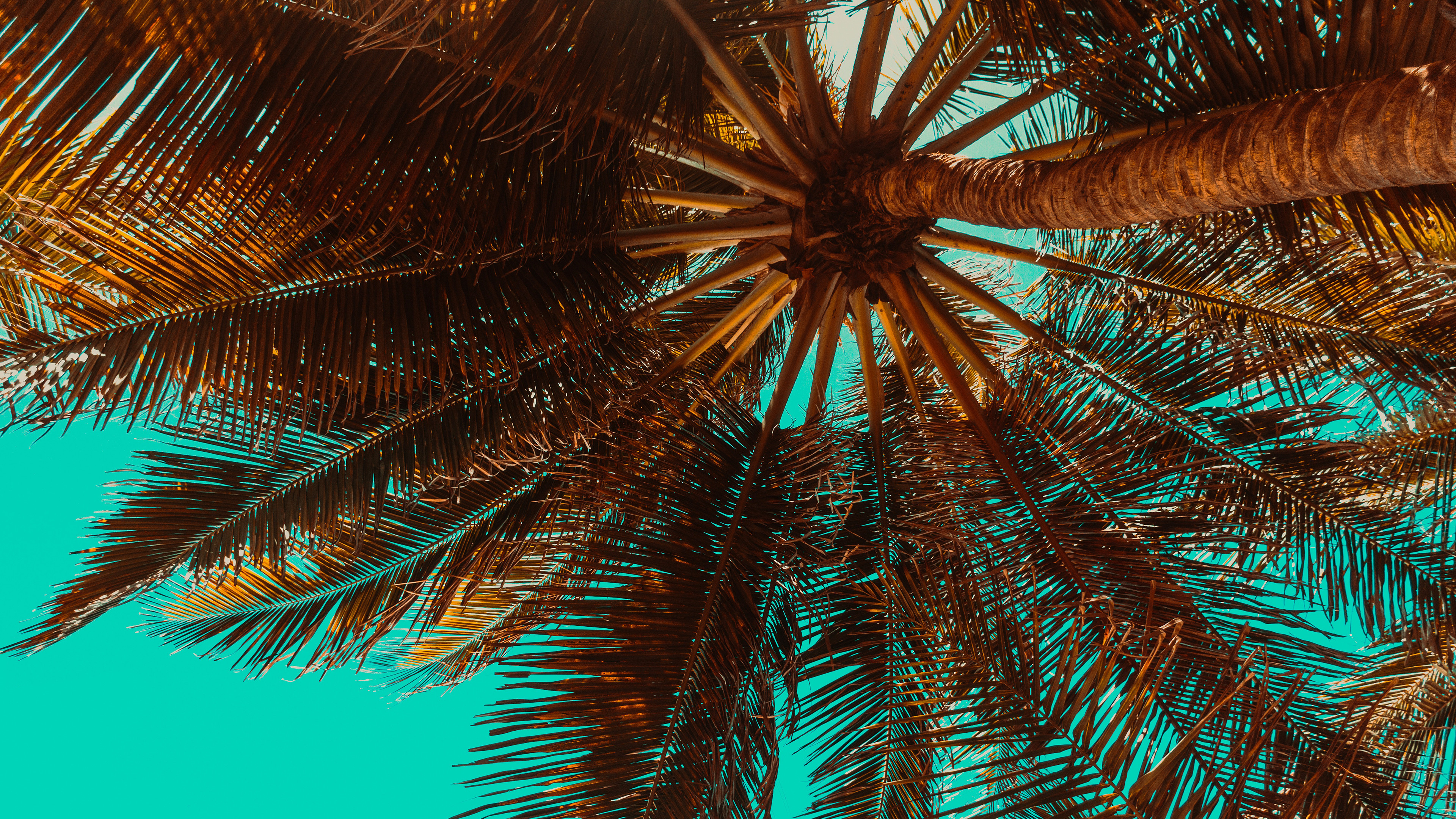 Palm Tree Desktop Wallpaper (72+ images)