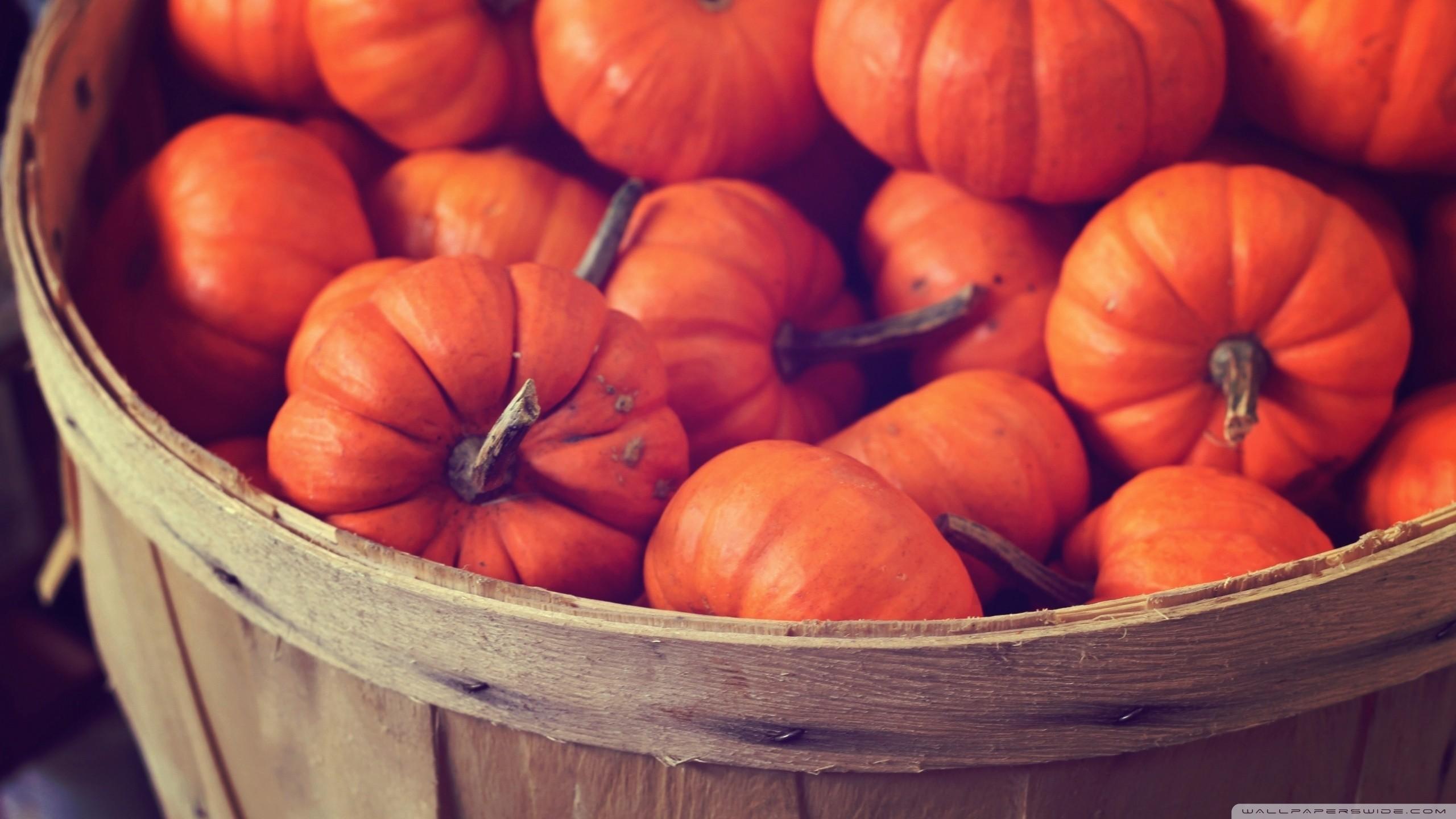 Autumn pumpkin wallpaper 47 images - Fall wallpaper pumpkins ...