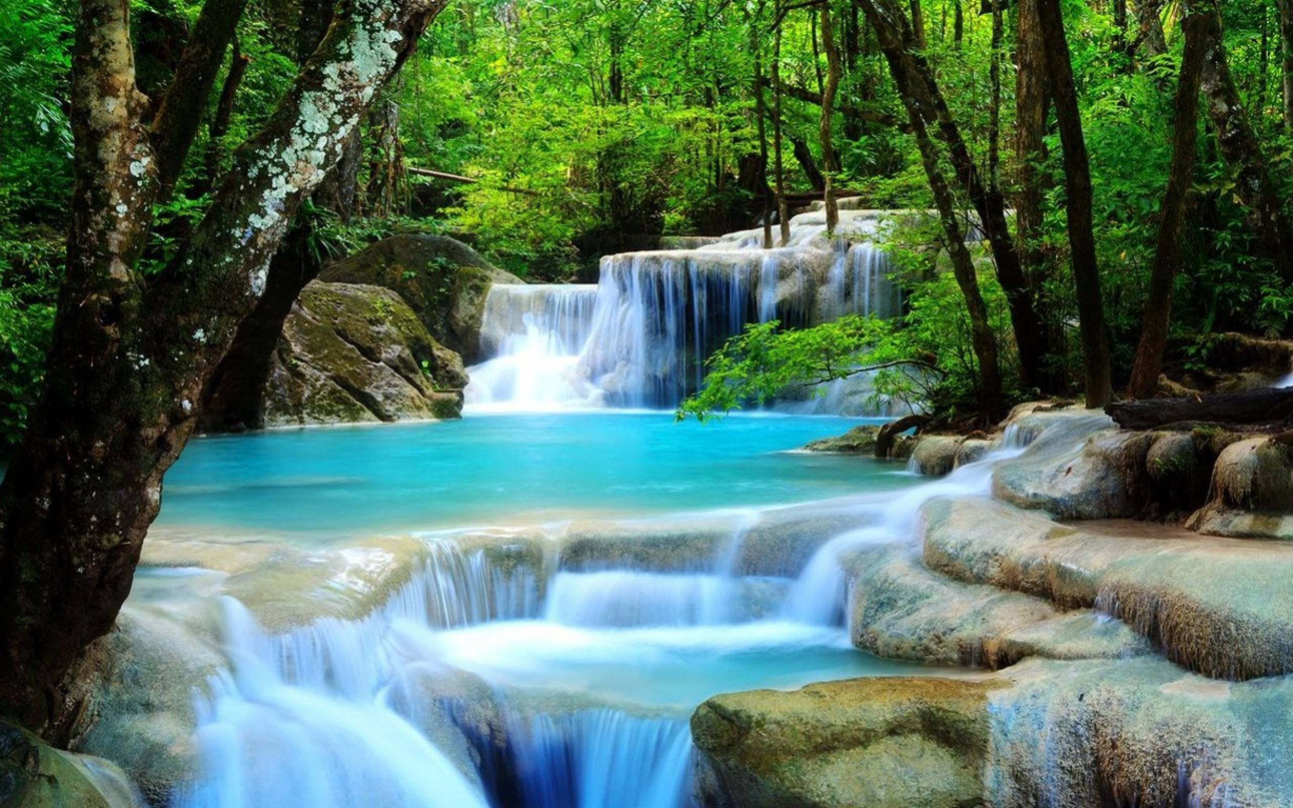 2560x1600 Waterfall Image For Desktop Wallpaper 2560 x 1600 px 1.2 MB rainforest  tropical natures flowers beautiful