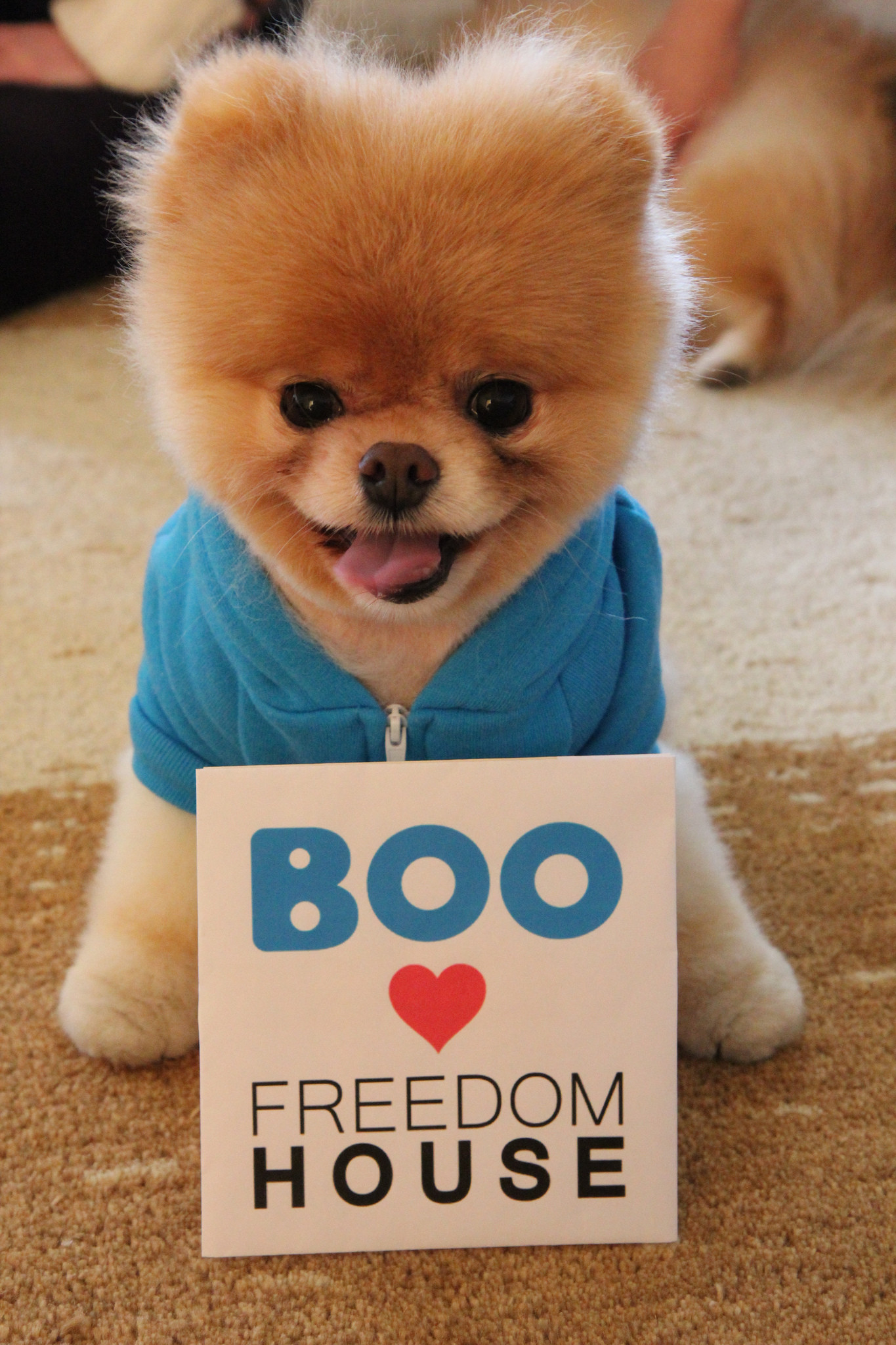 1365x2048 Boo the dog visits Freedom House