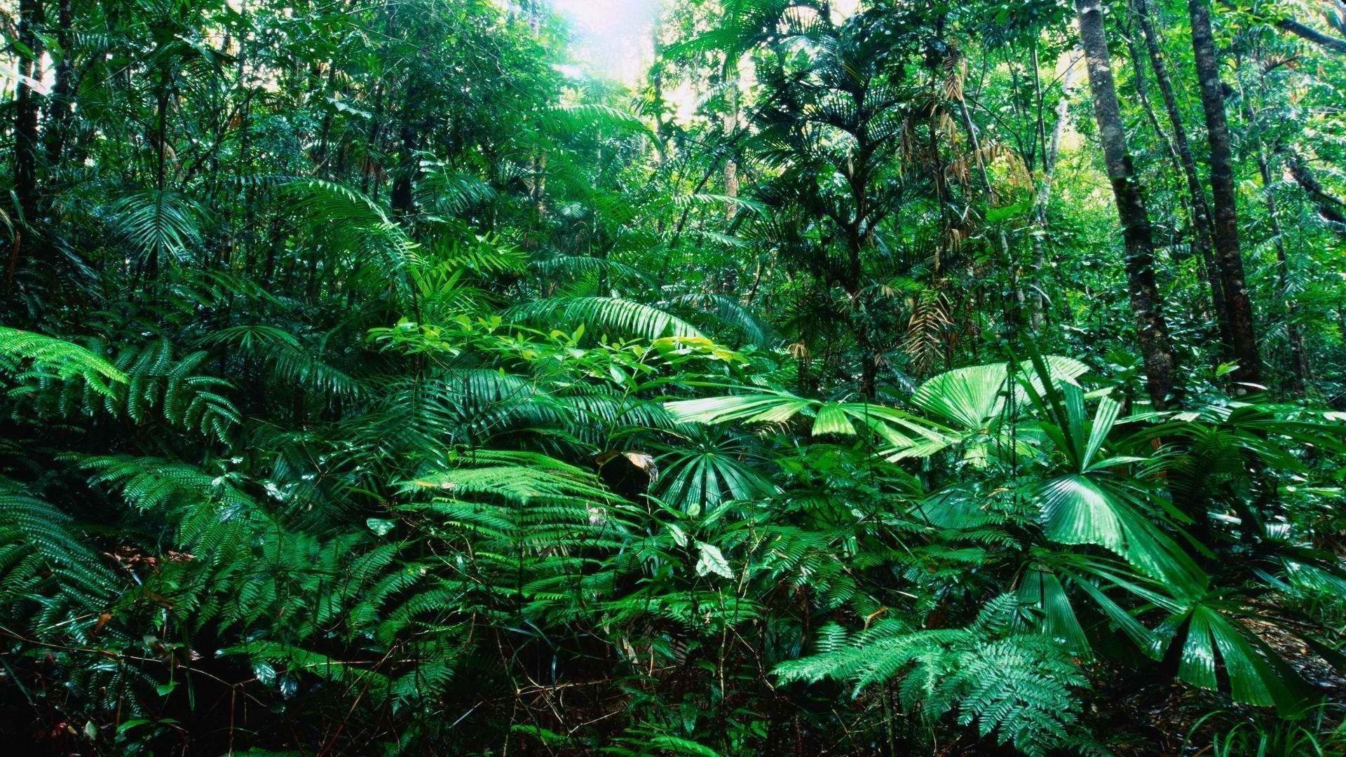 Rainforest Wallpaper (61+ images)