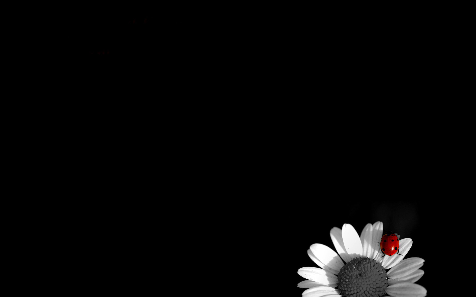 Black and white roses wallpaper 56 images 1920x1200 black rose wallpapers mightylinksfo