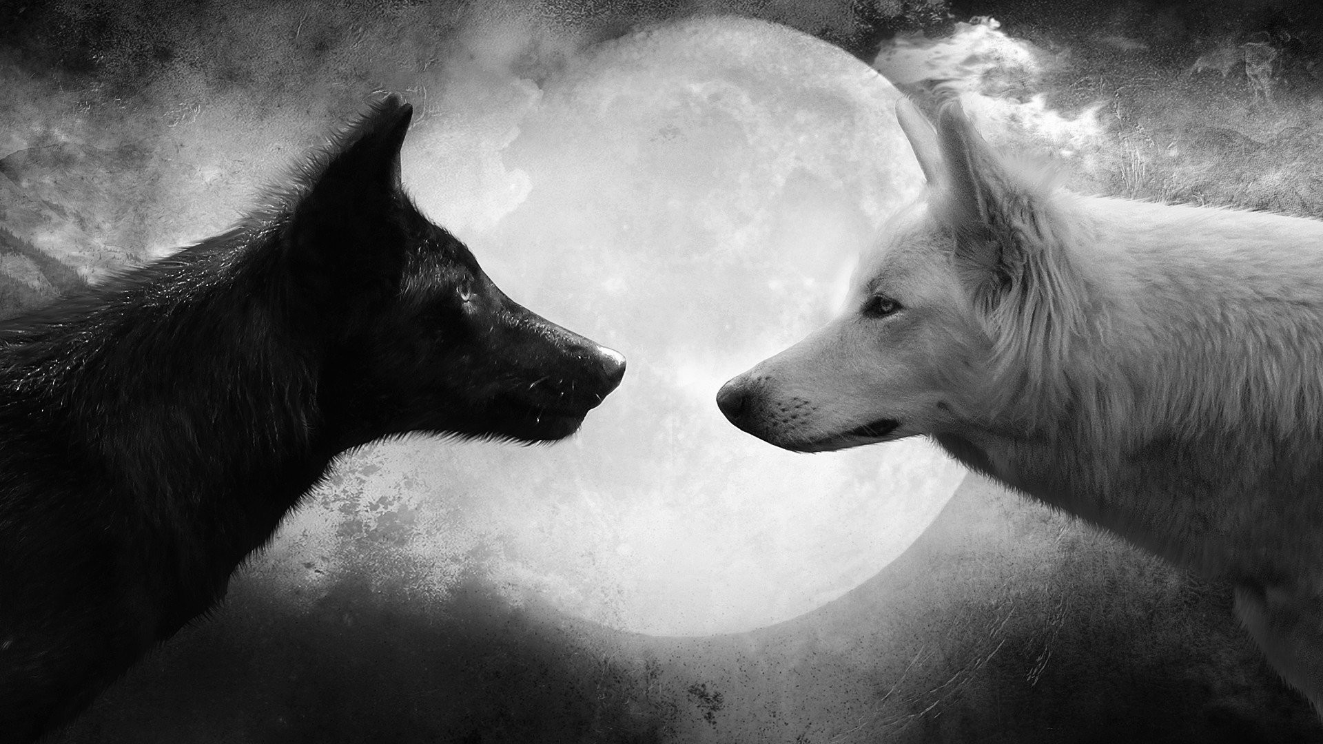 1920x1080 Animal - Wolf Black White Moon Wallpaper