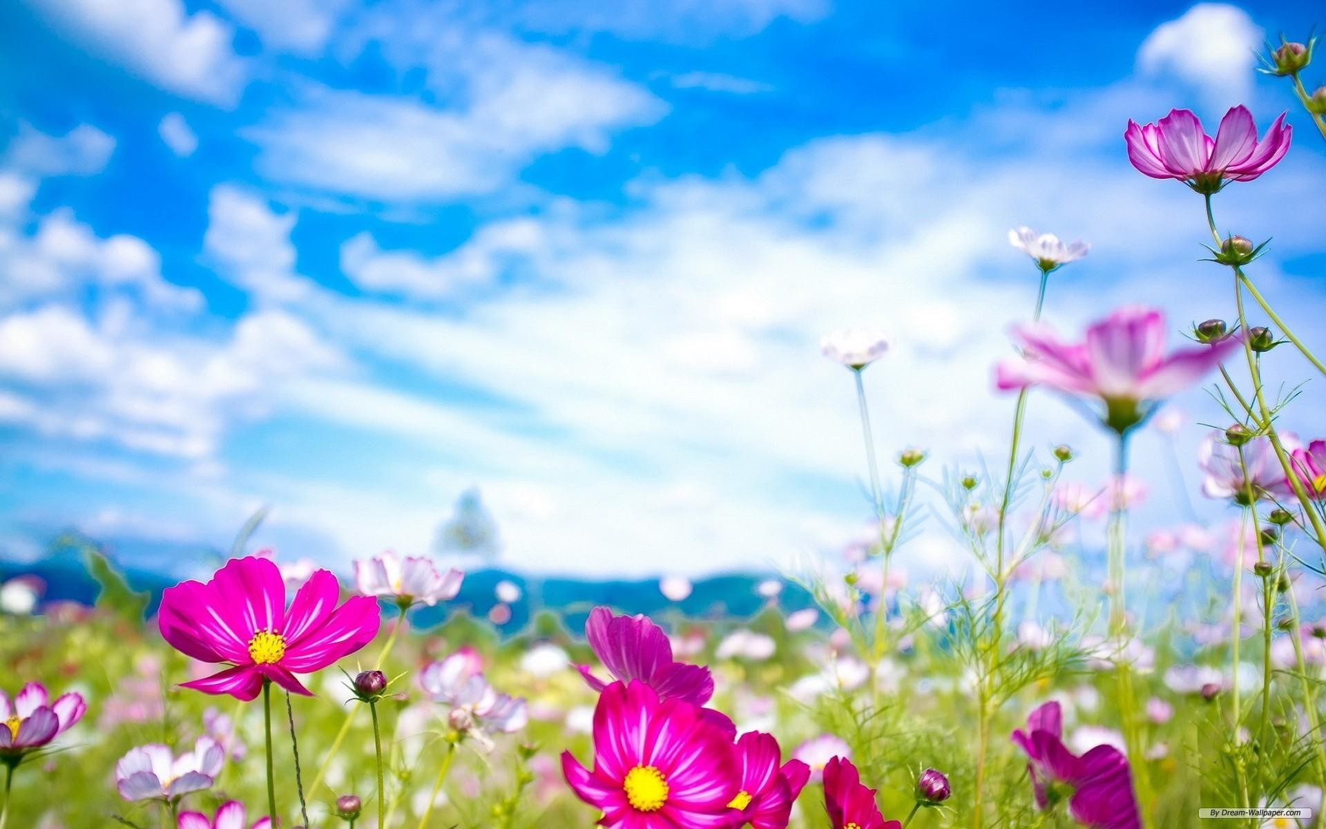 1920x1200 Spring Flower Background (03)