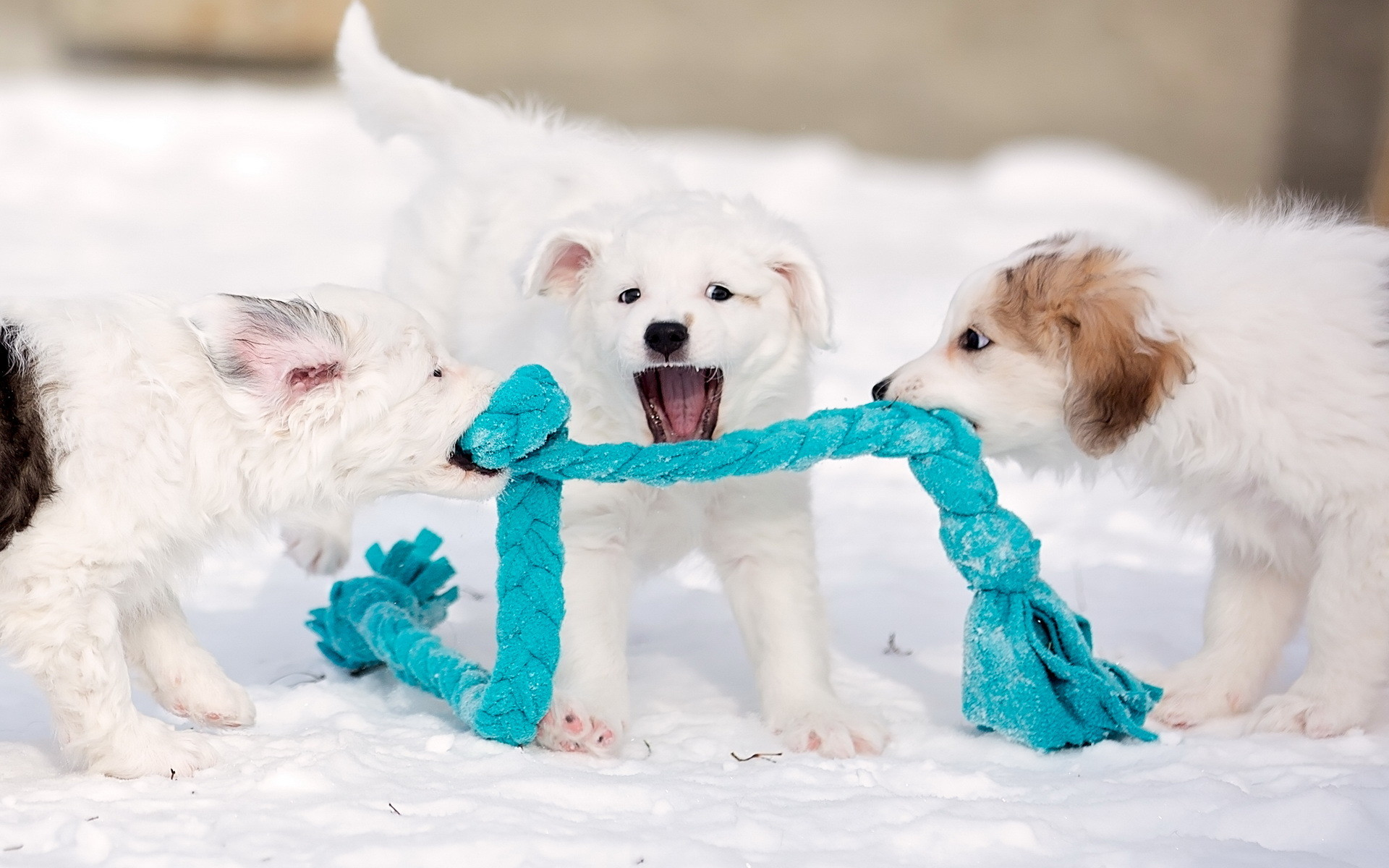 1920x1200 Cute Wallpapers Dogs Puppies