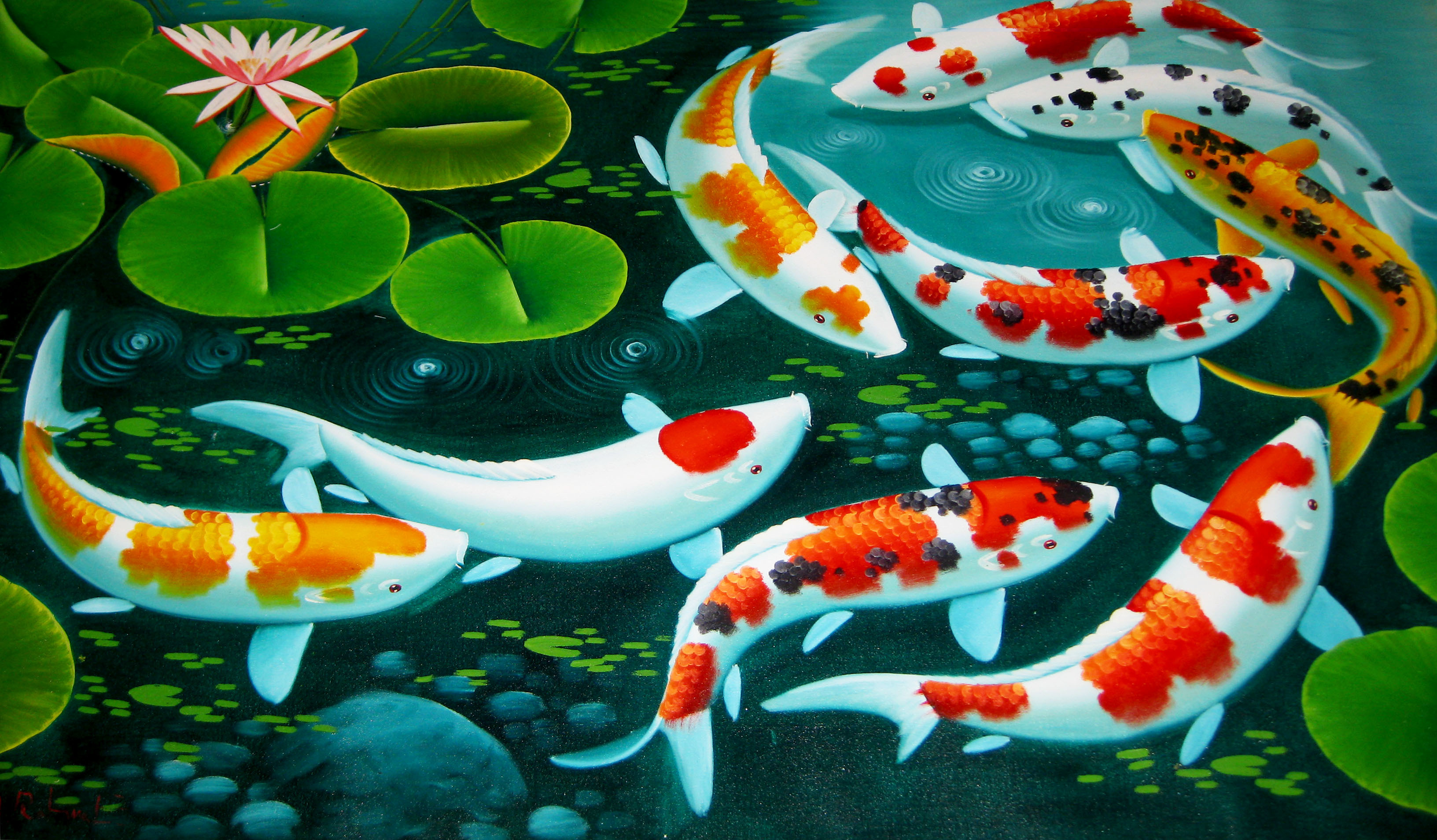 3264x1908 Koi Fish Wallpaper Koi Fish Desktop Background Pictures
