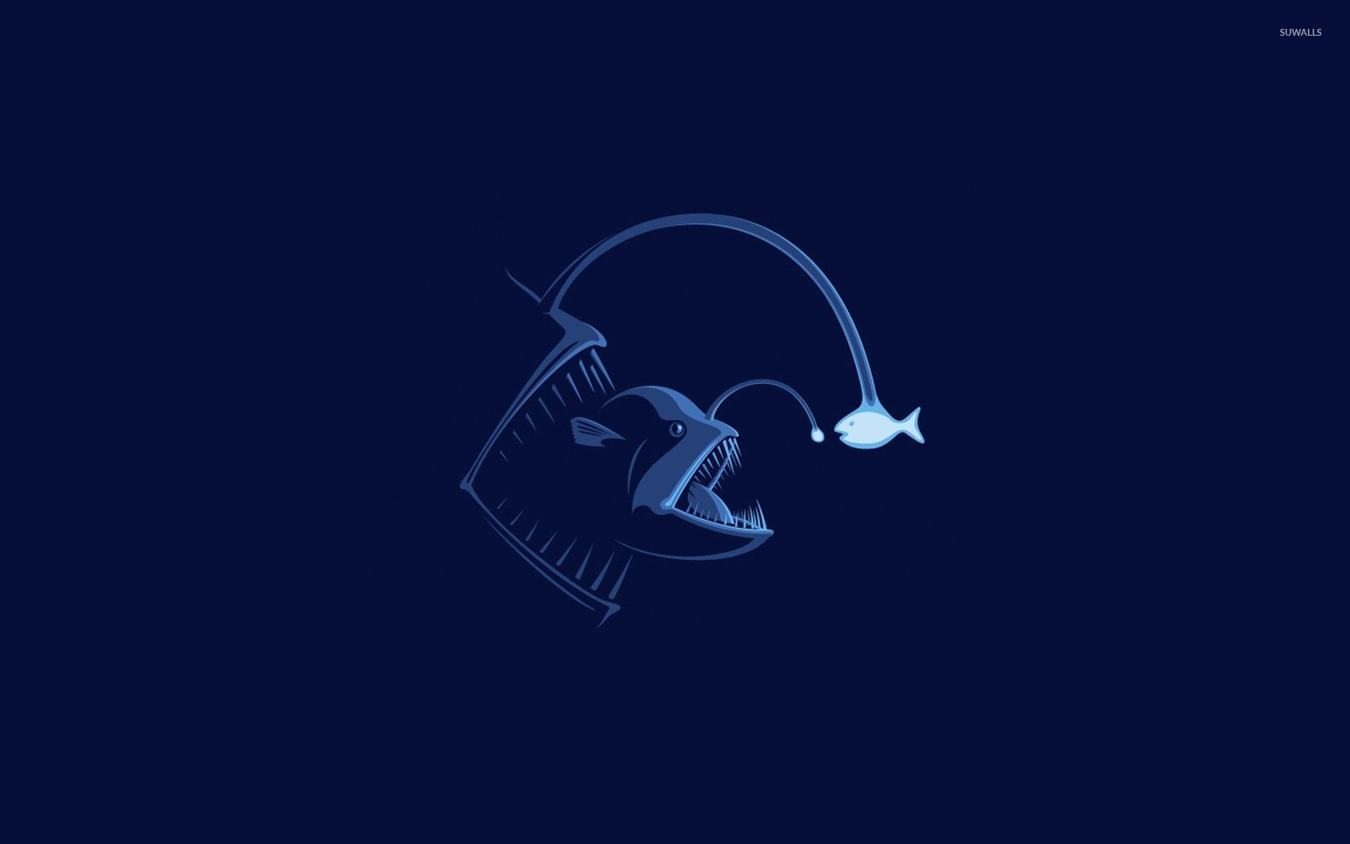 1920x1200 Anglerfish wallpaper  jpg
