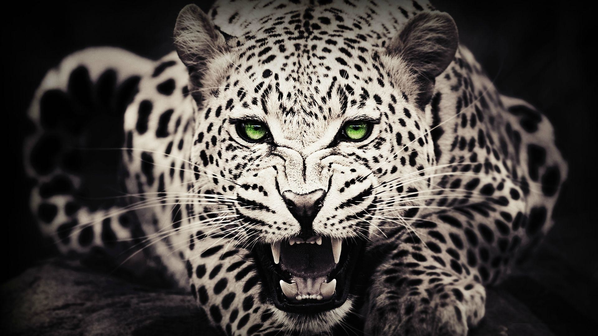 Cool animal wallpaper 58 images 1920x1080 animal wallpaper cool animal iphone wallpaper wallpaper hd voltagebd Images