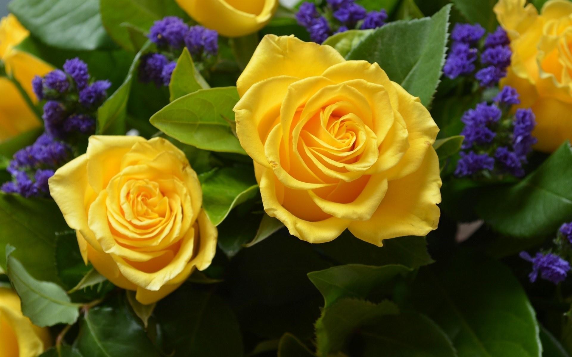 Yellow Roses Wallpaper...