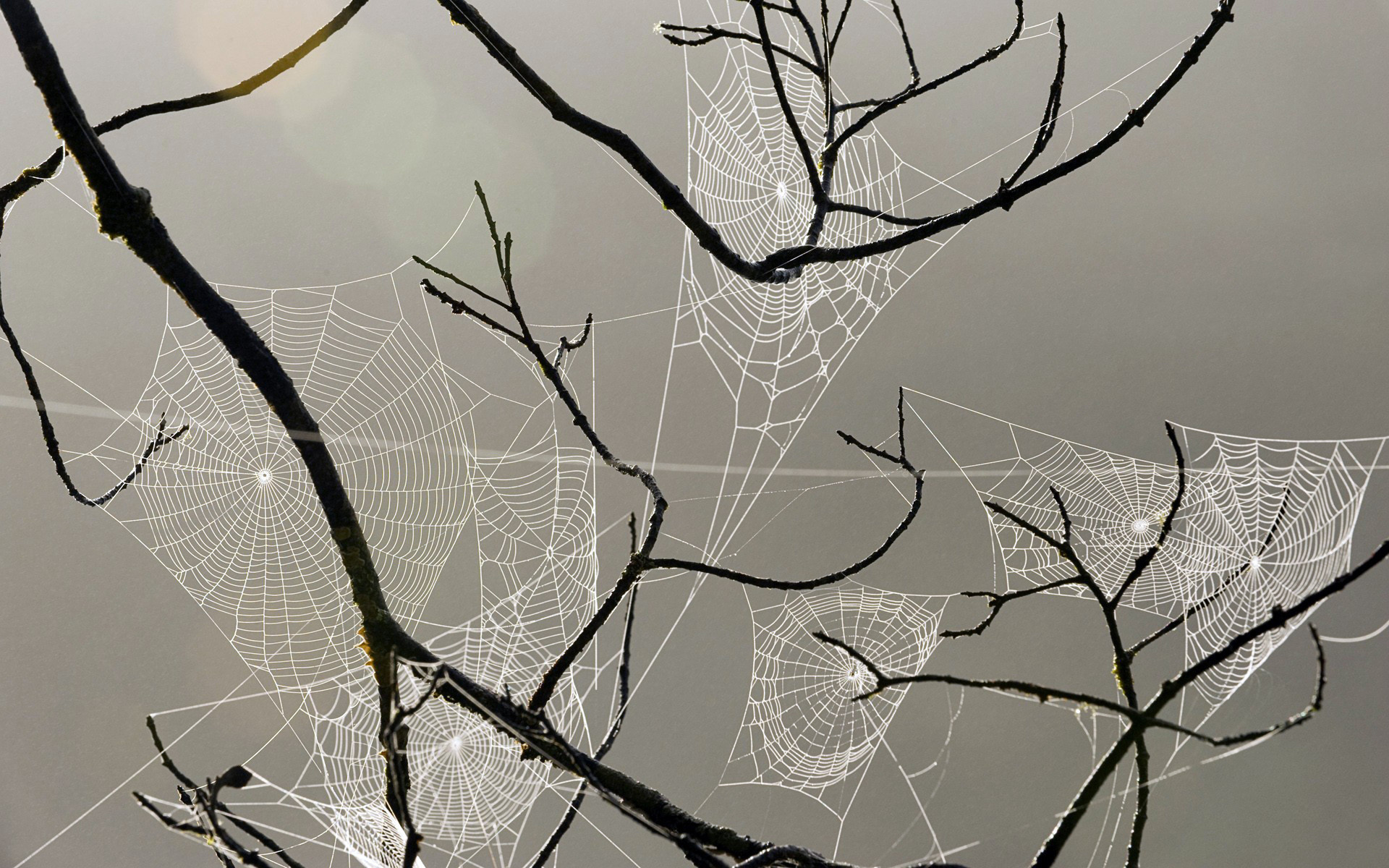 1920x1200 spiderweb webs insects drops dew macro wallpaper