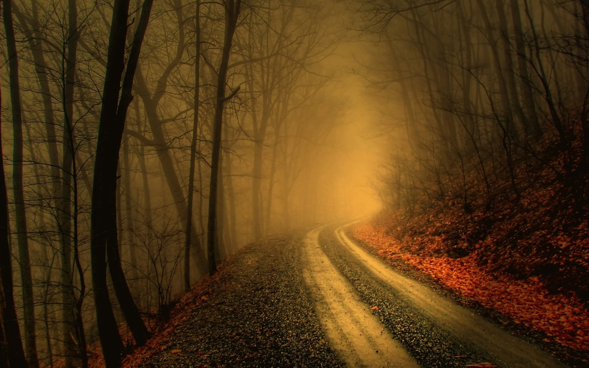 1920x1200 foggy road in dark forest hd wallpapers