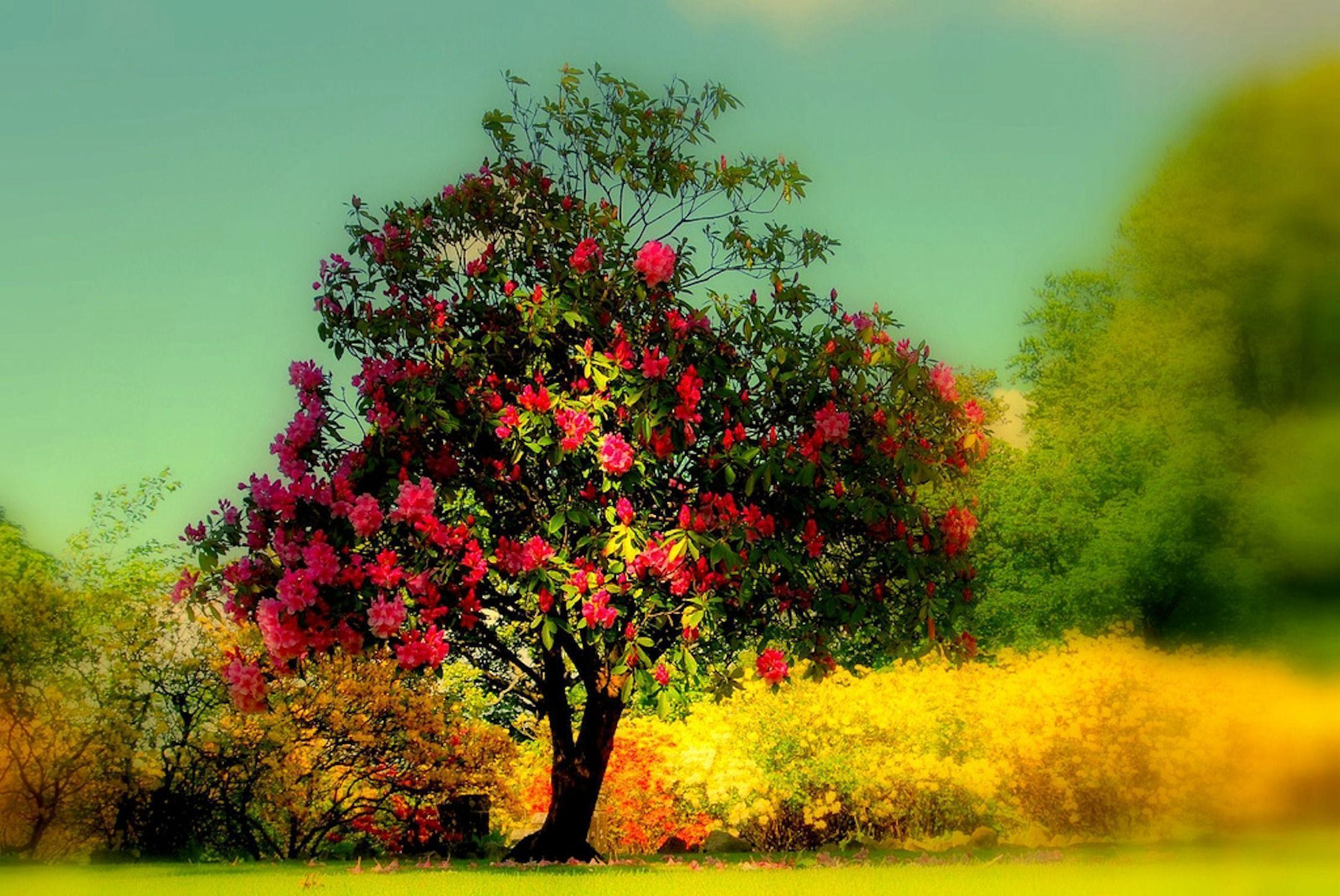 2232x1493 HD Beautiful Tree Wallpaper | Download Free - 118471