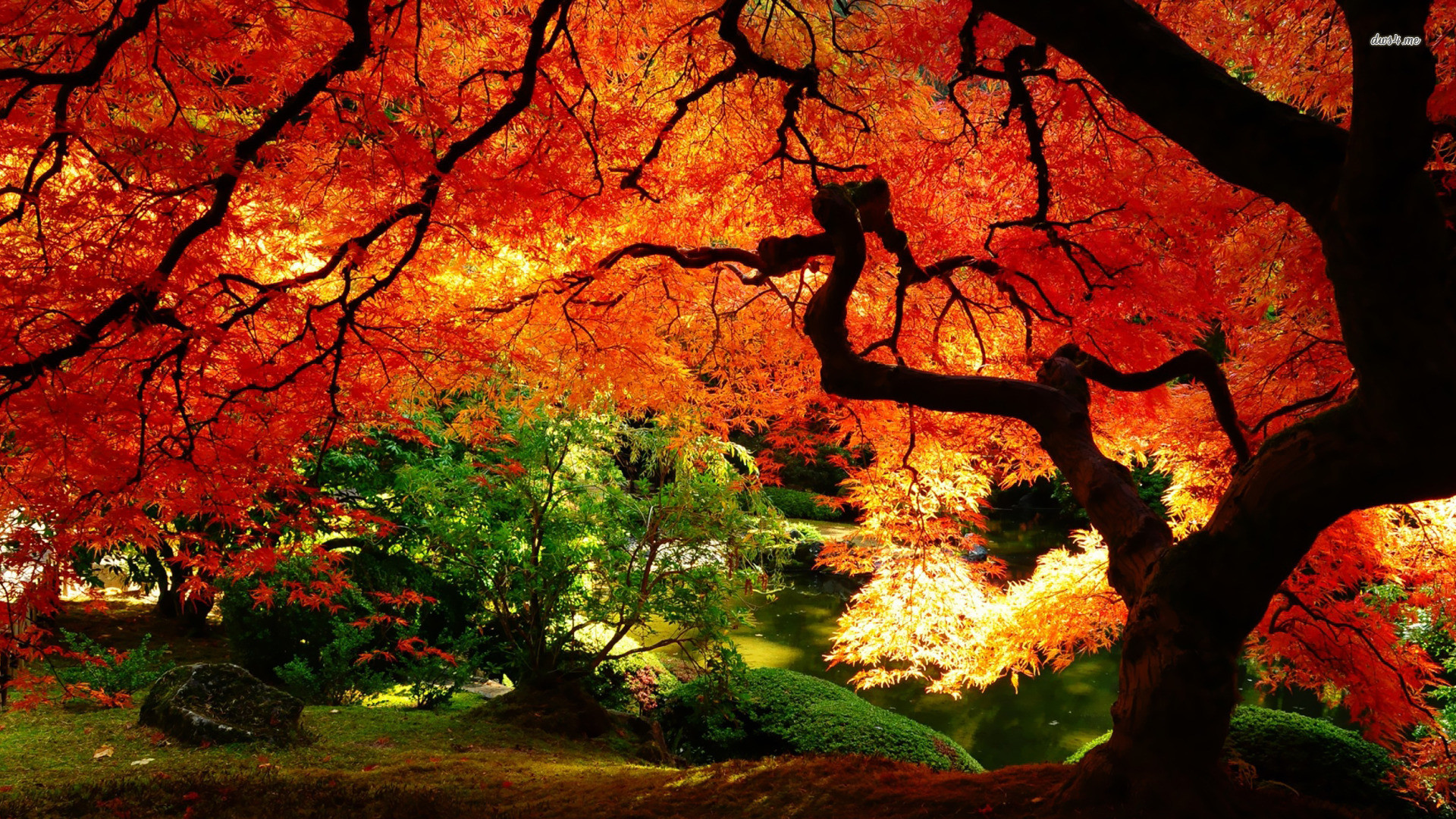 1920x1080 Name: 4315-autumn-landscape--nature-wallpaper.jpg Views