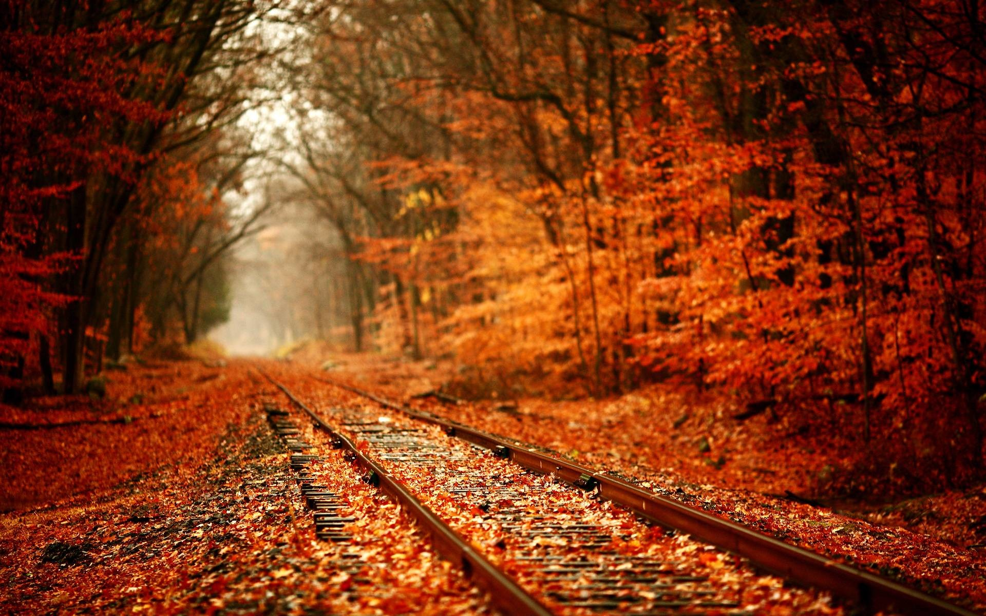 1920x1200 Autumn Leaves Desktop Wallpaper | Autumn Leaves Photos | Cool .