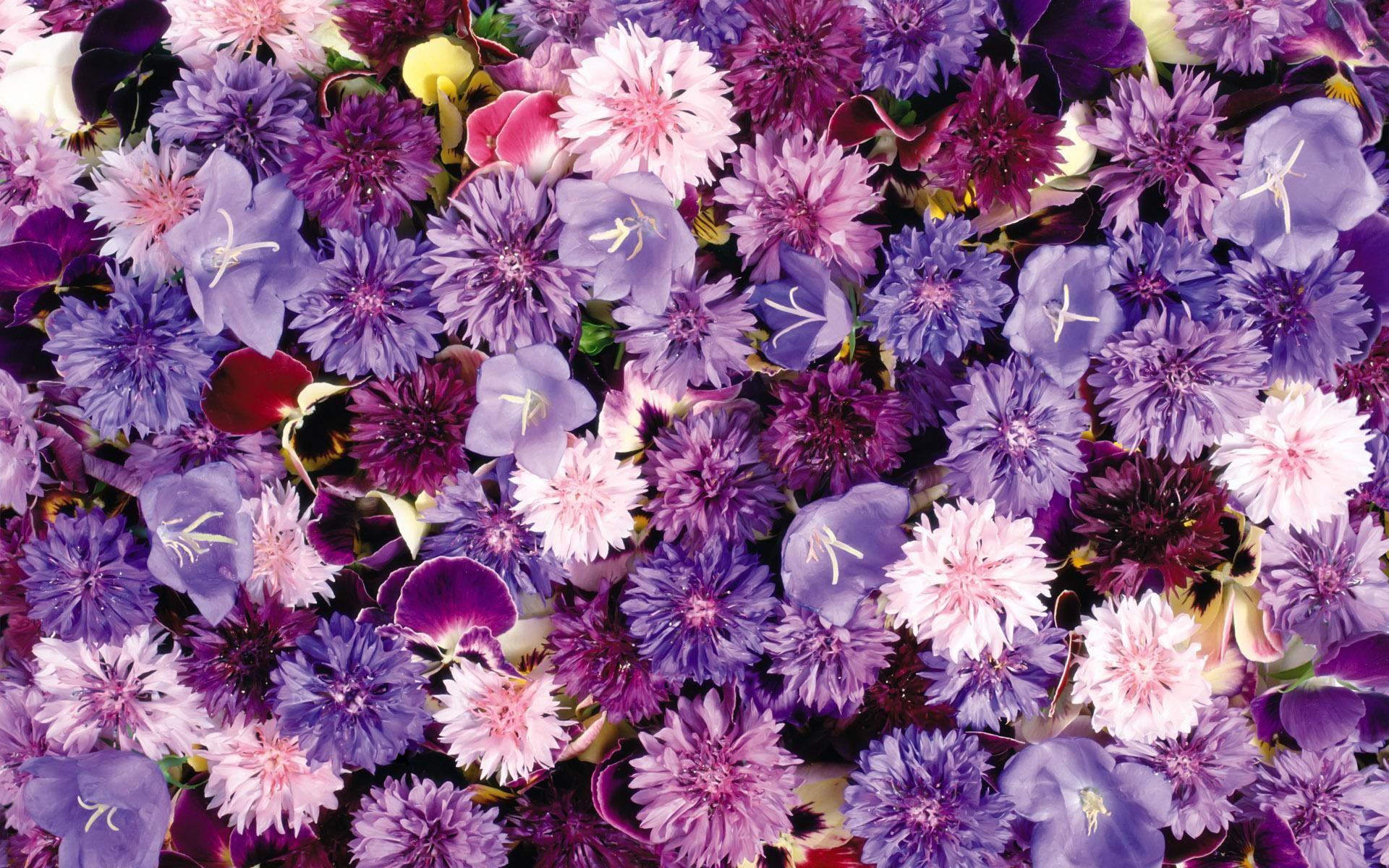 Beautiful Wallpaper Aesthetic Purple - 793619-tumblr-purple-backgrounds-1920x1200-windows  2018_203141      .jpg